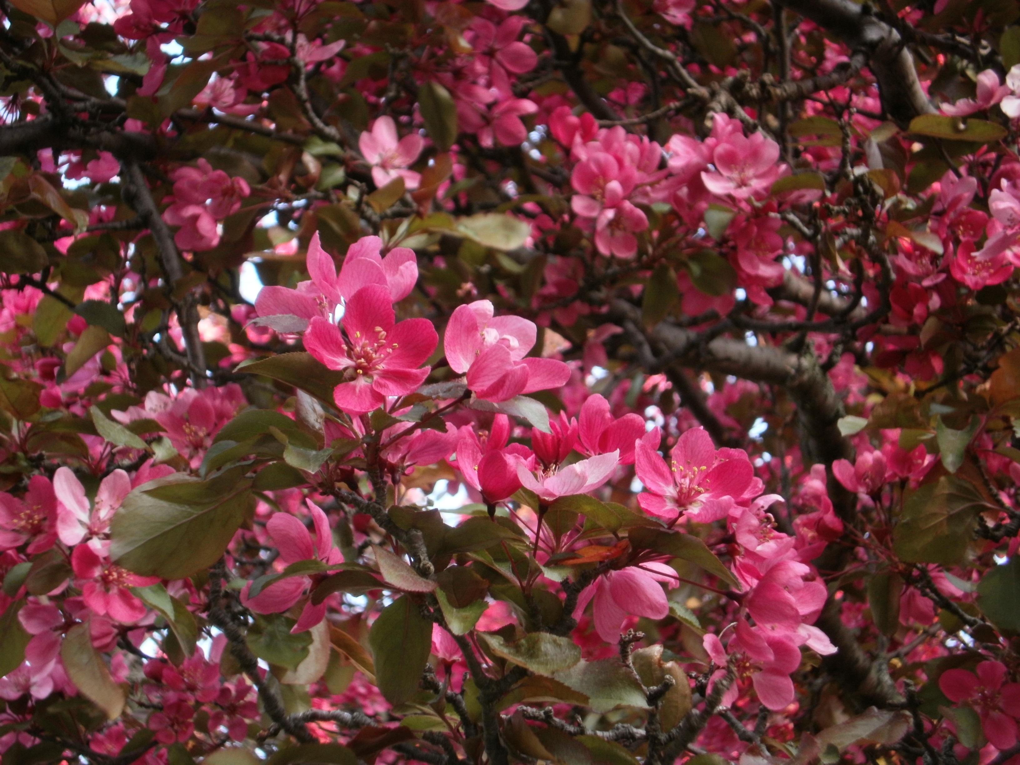 free images tree nature branch blossom leaf flower petal