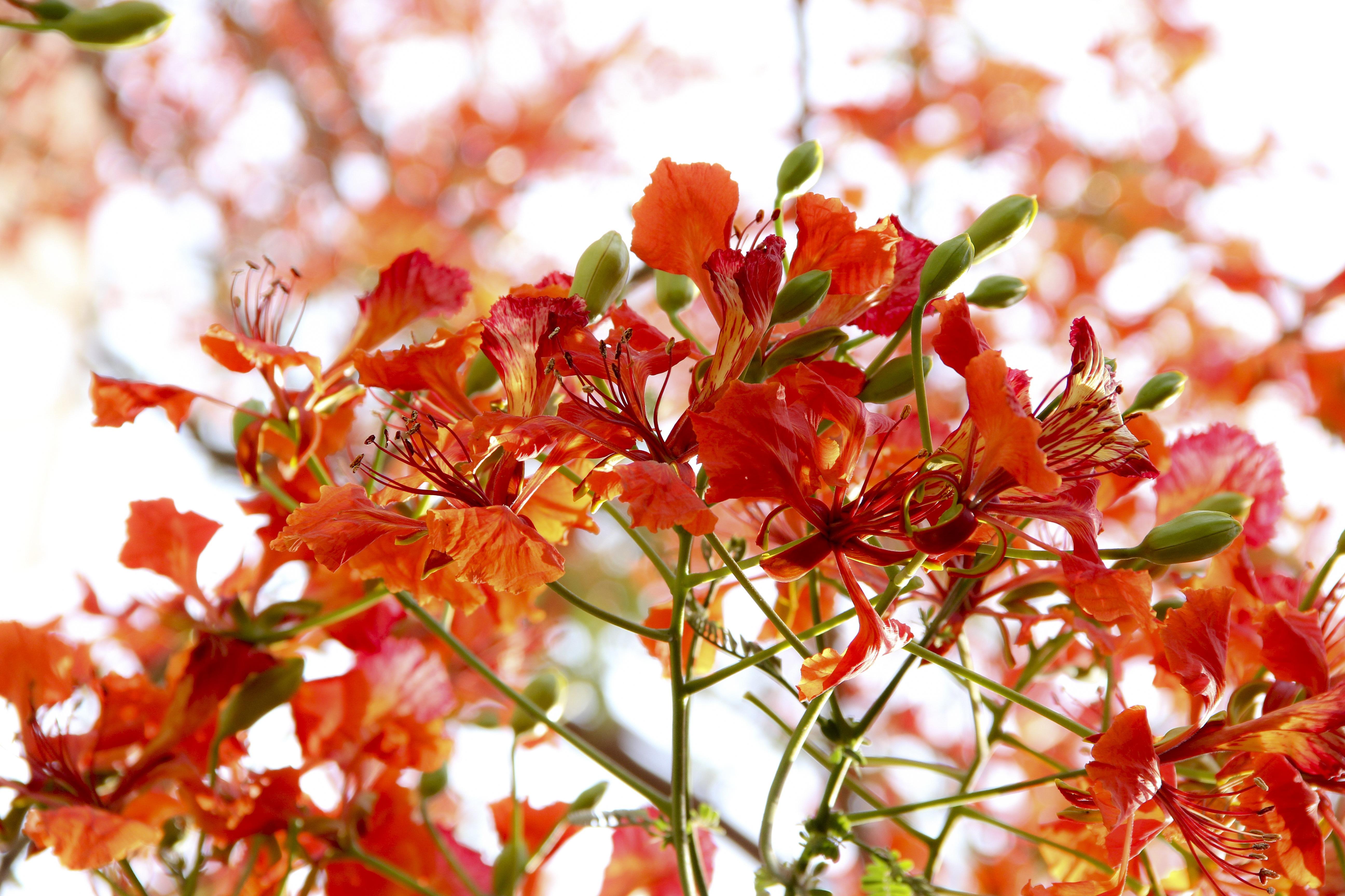 Gambar Alam Cabang Mekar Menanam Daun Bunga Merah