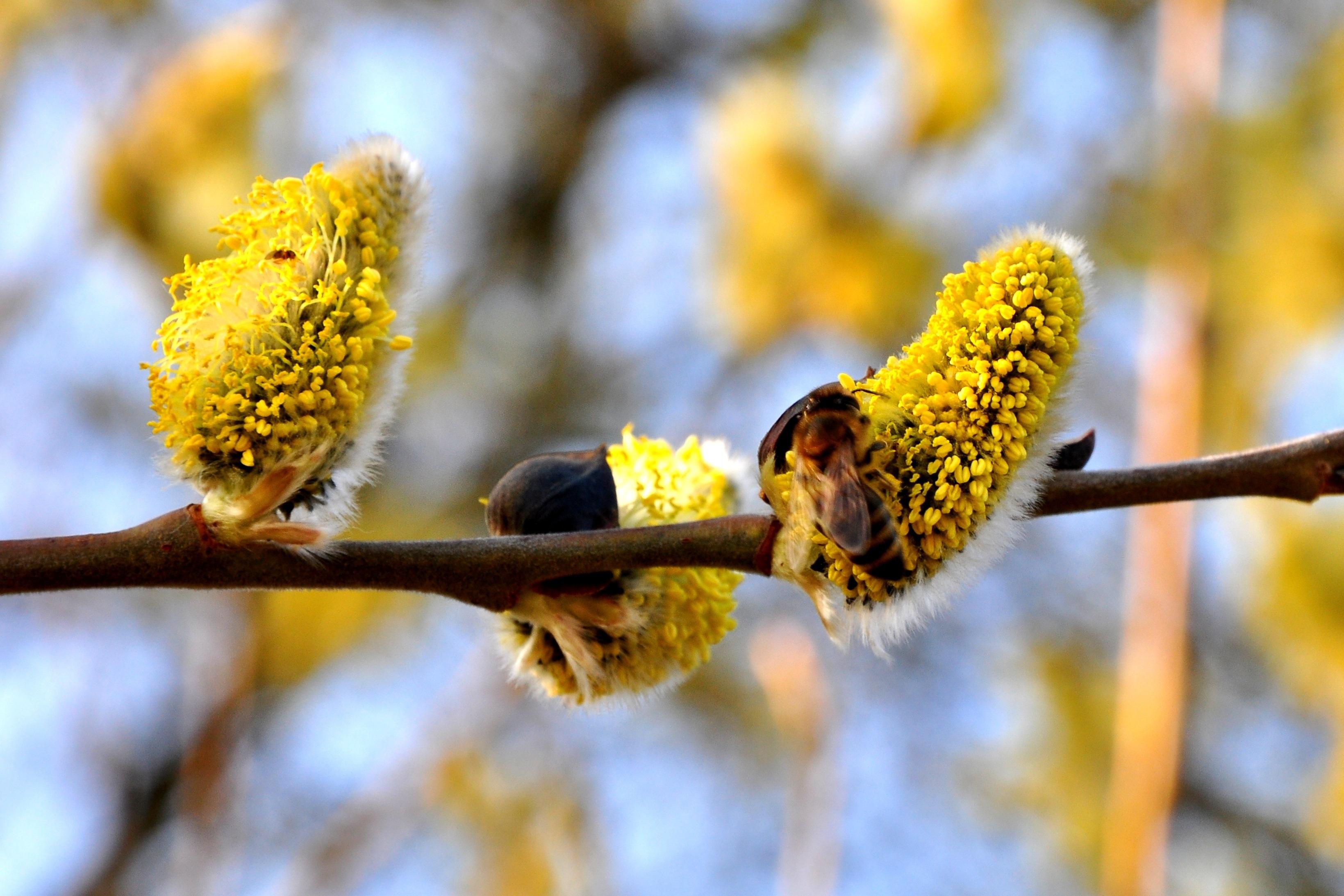 приветливый, березовая пыльца картинки шов можно