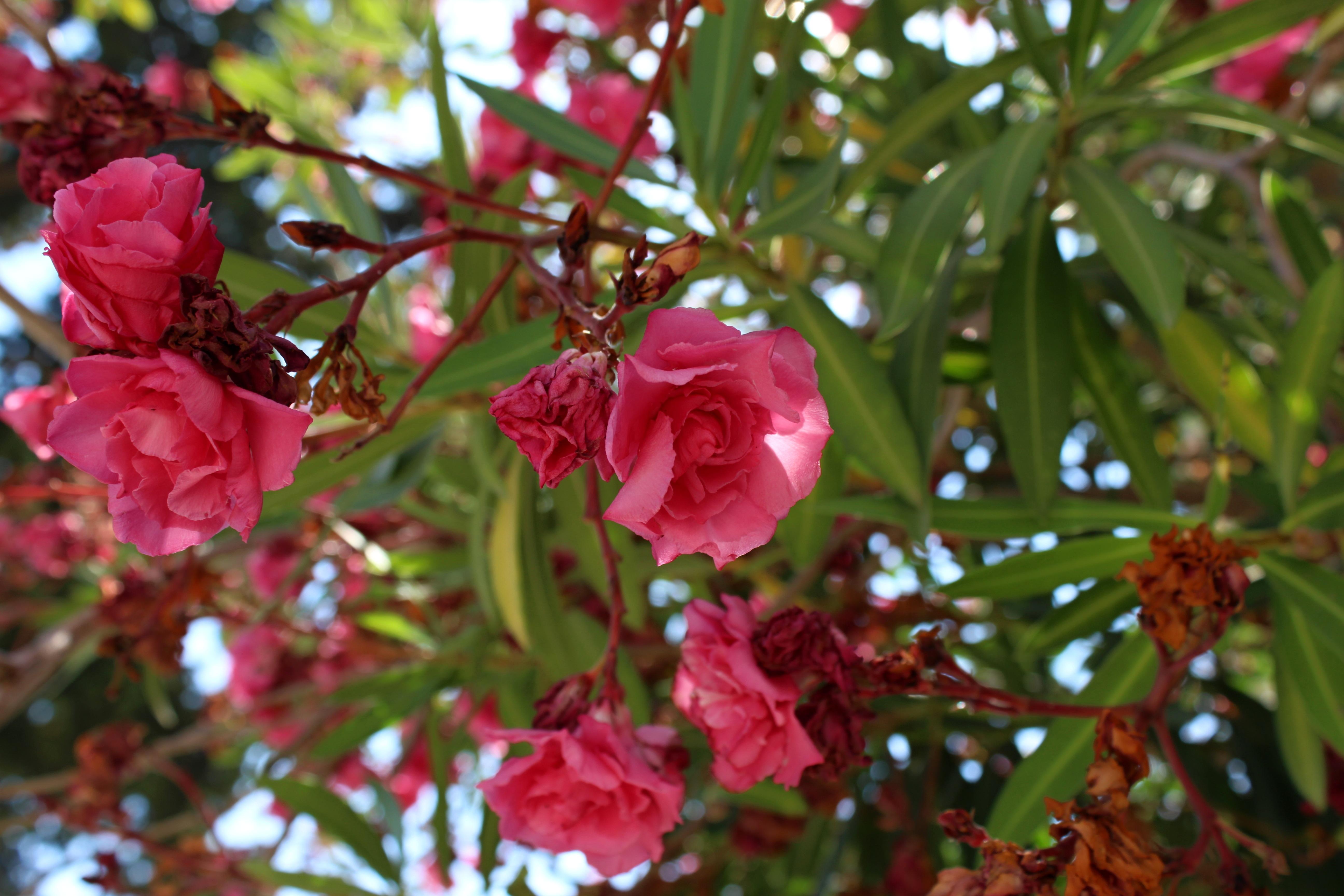 images gratuites arbre la nature branche feuille printemps vert rouge macro parc. Black Bedroom Furniture Sets. Home Design Ideas