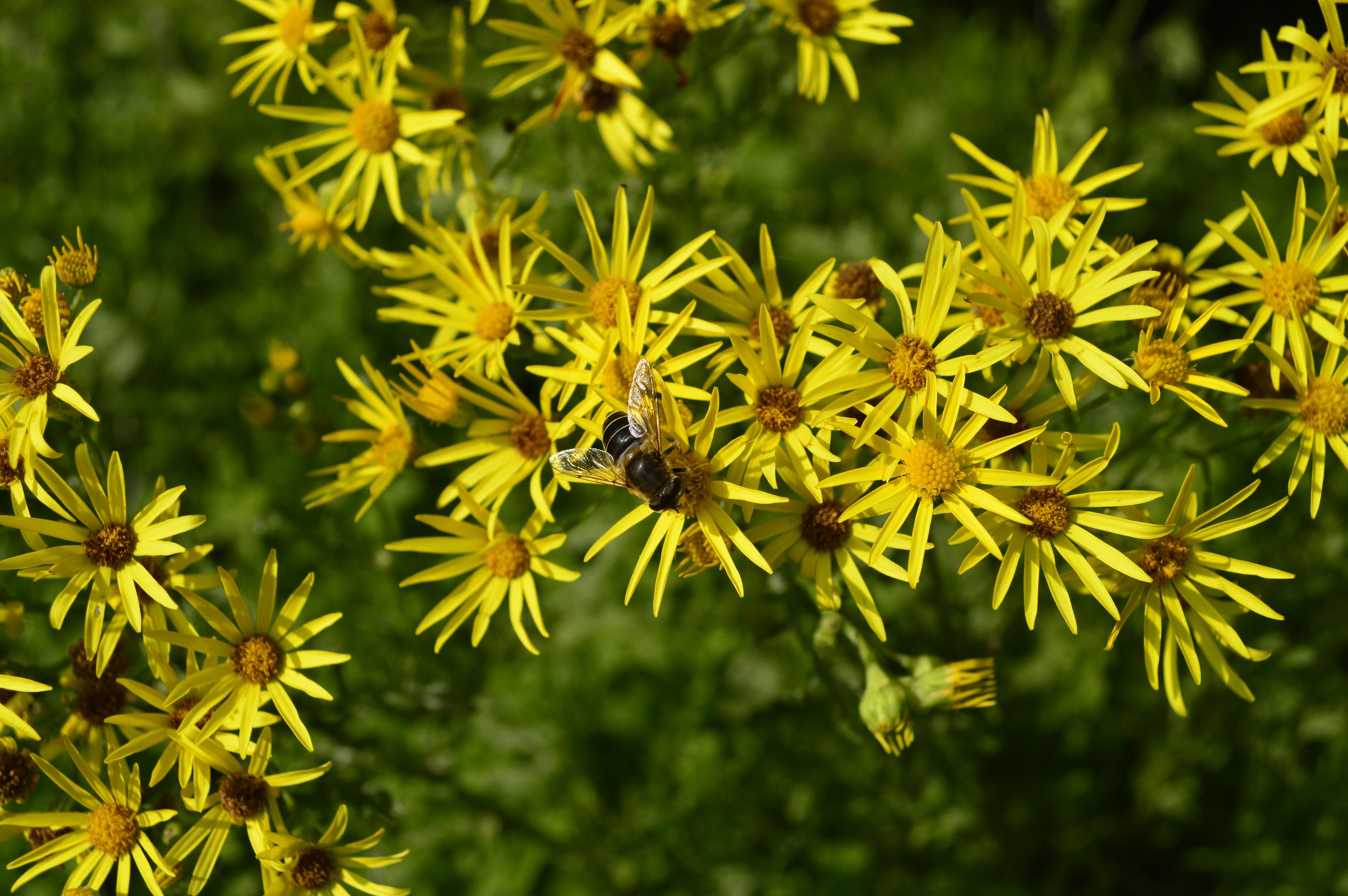 natureza ramo plantar prado folha flor floral verde cor natural botnica amarelo flora flor amarela flores silvestres flores arbusto