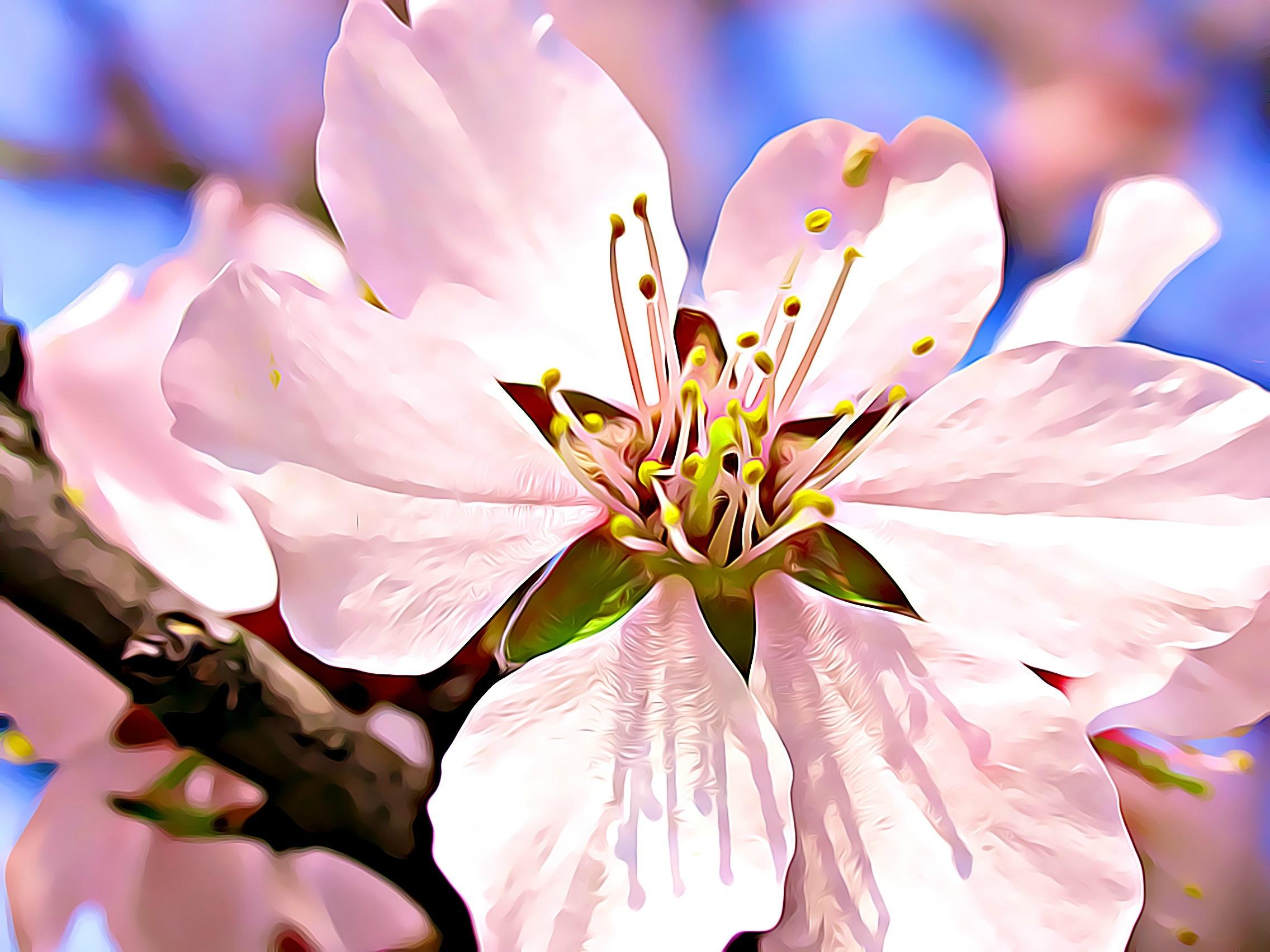 Fotoğraf Ağaç Doğa şube çiçek Fotoğrafçılık Yaprak