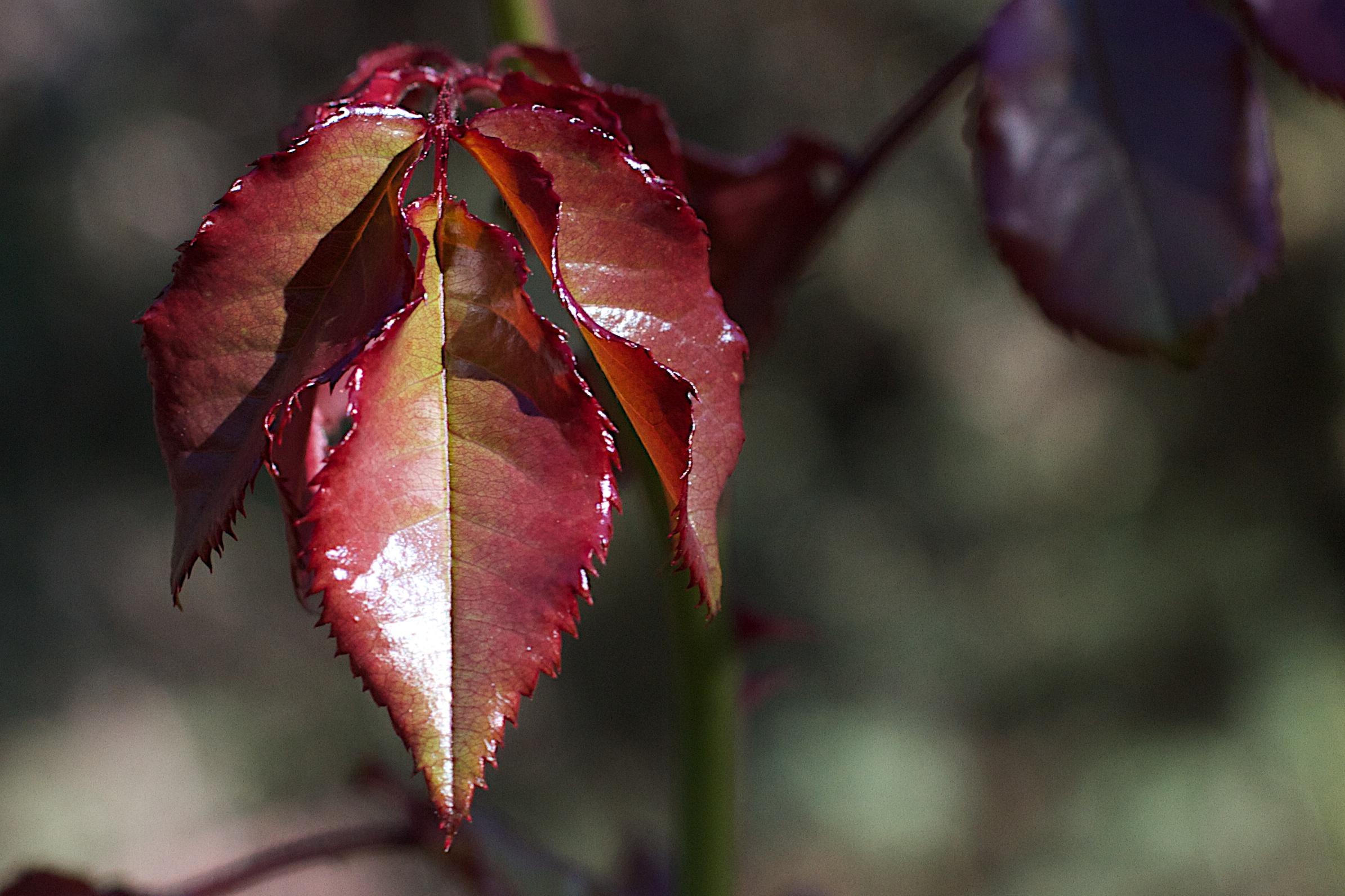 Images Gratuites Arbre La Nature Branche Fleur La Photographie