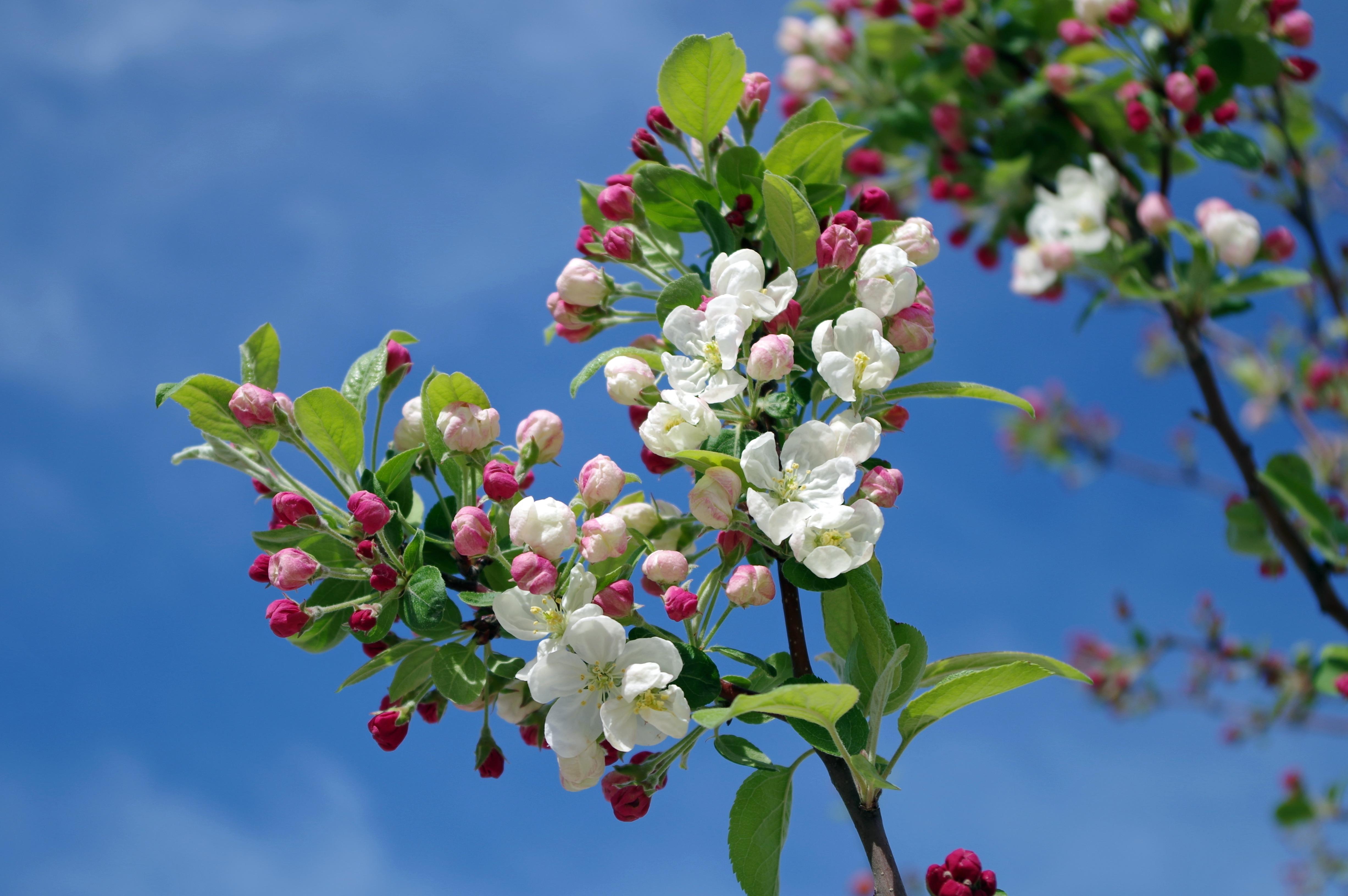 Весна май цветы картинки
