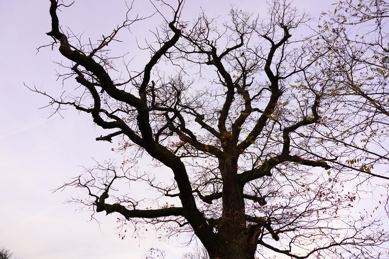 вместе чеховым дерево без листвы фото самые бюджетные