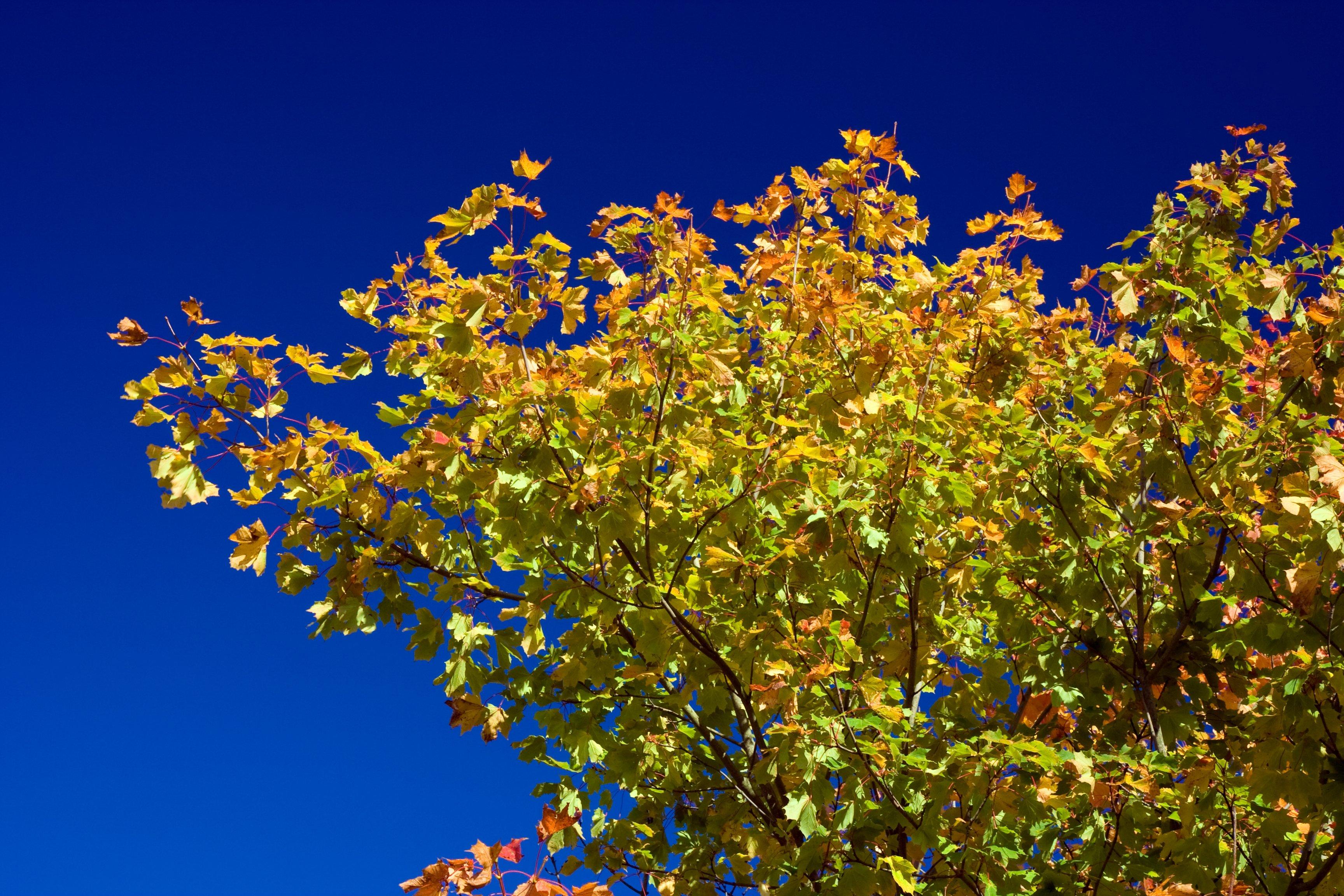 banco de imagens rvore natureza ramo flor plantar cu prado luz solar folha cair flor azul flora flores silvestres sai arbusto