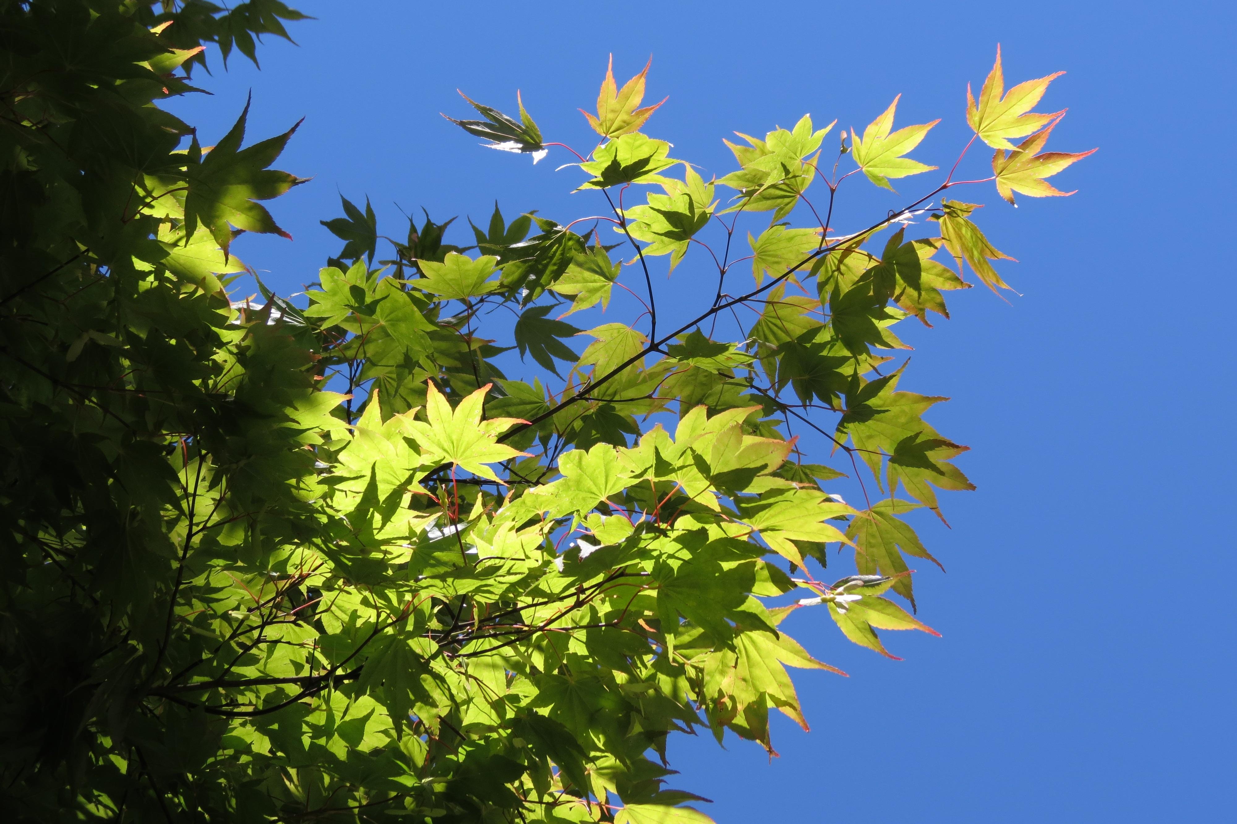 Картинки летняя листва