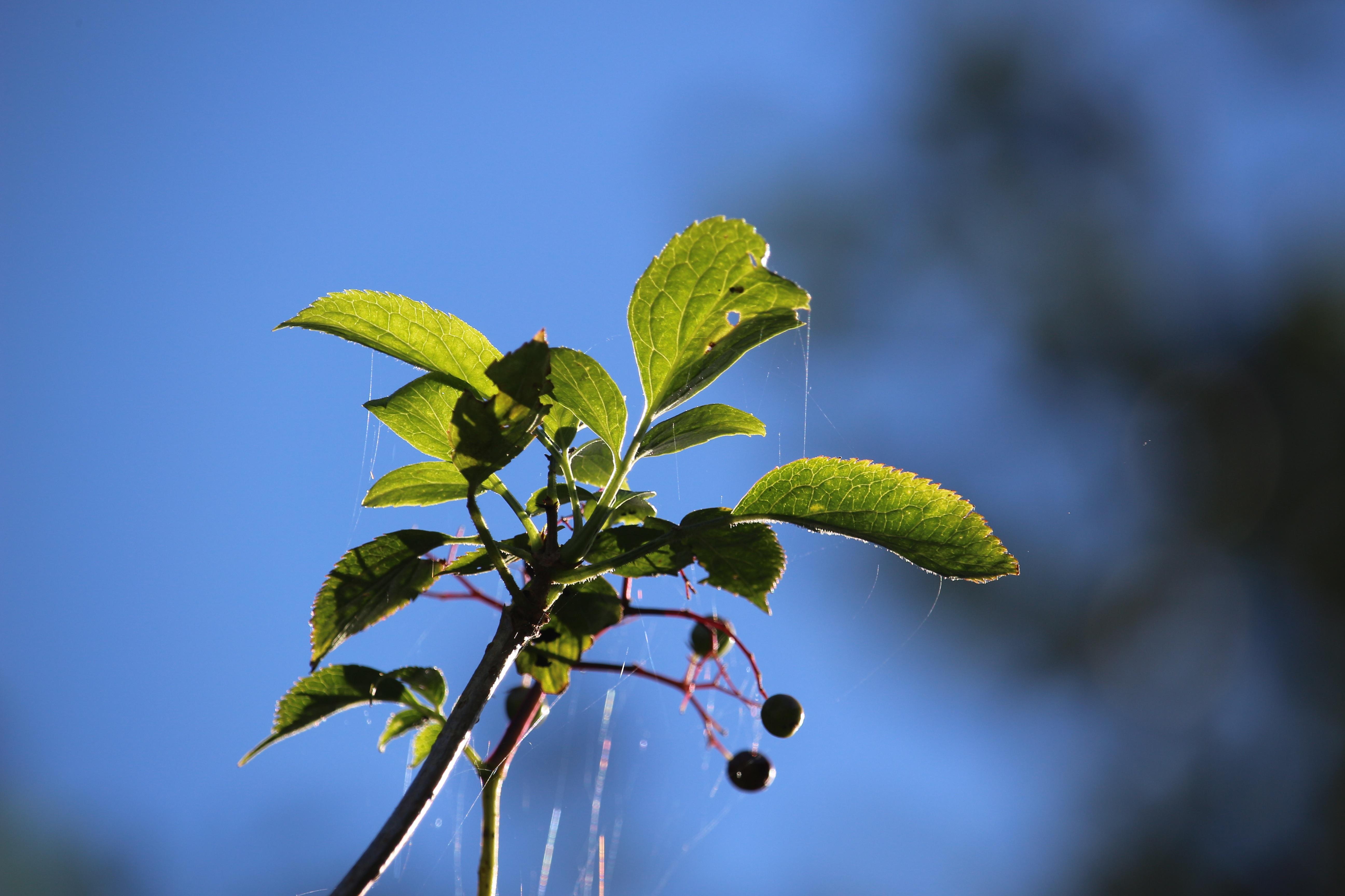 Spätsommer  Kostenlose foto : Baum, Natur, Ast, blühen, Himmel, Fotografie ...