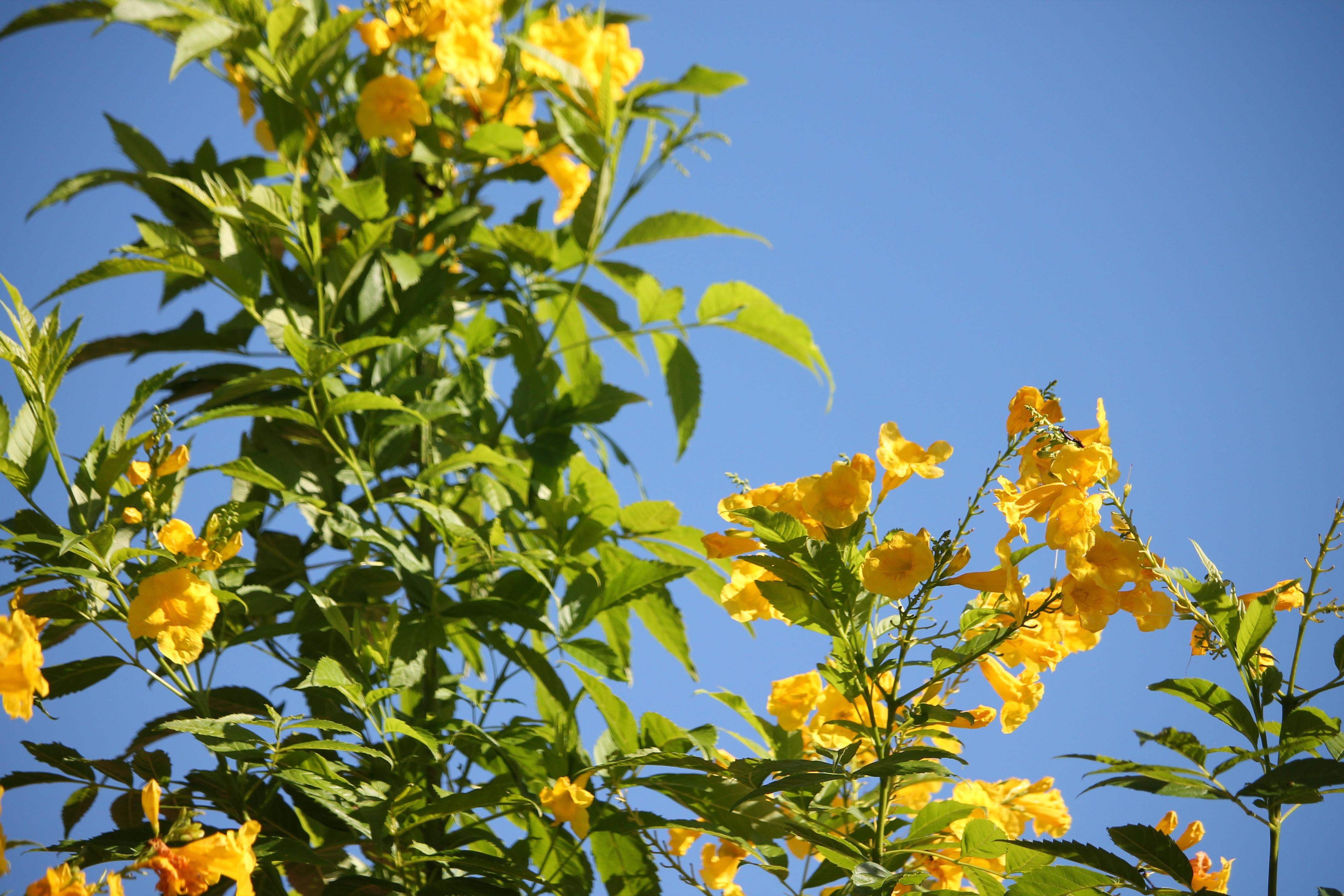 kostenlose foto : baum, natur, ast, blühen, himmel, sonnenlicht