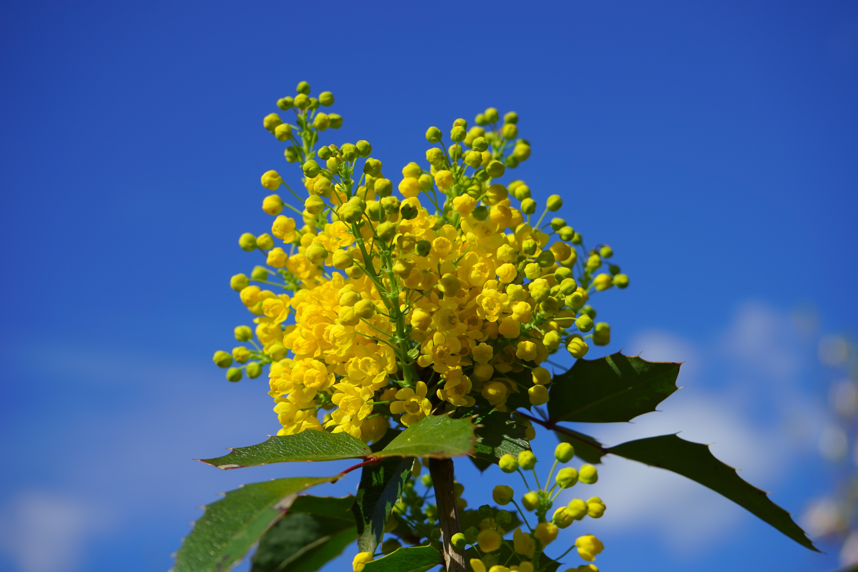 banco de imagens rvore natureza ramo flor plantar cu luz solar folha flor arbusto verde produzir azul amarelo flora flores silvestres