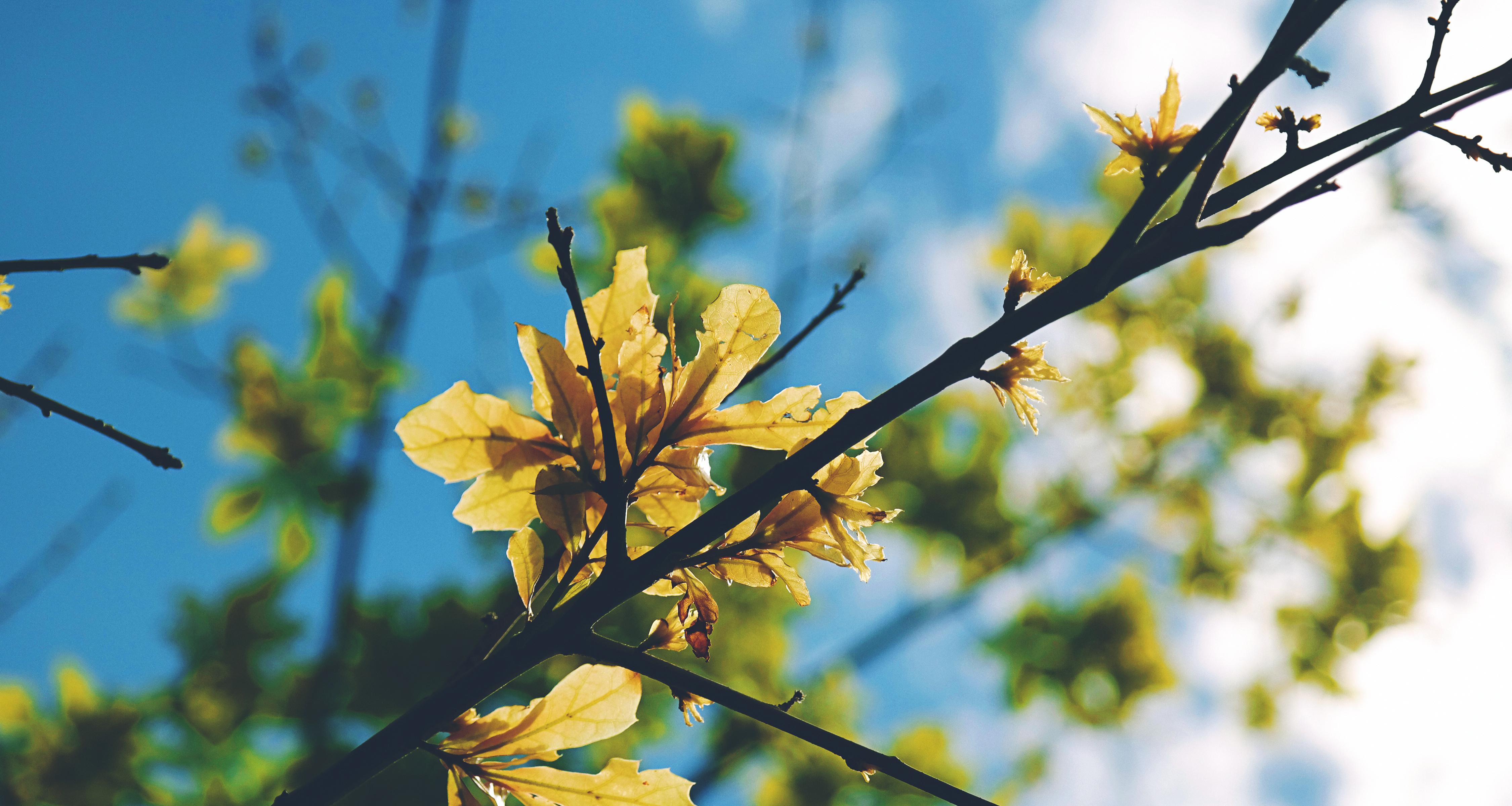 Images Gratuites Arbre La Nature Branche Fleur Ciel