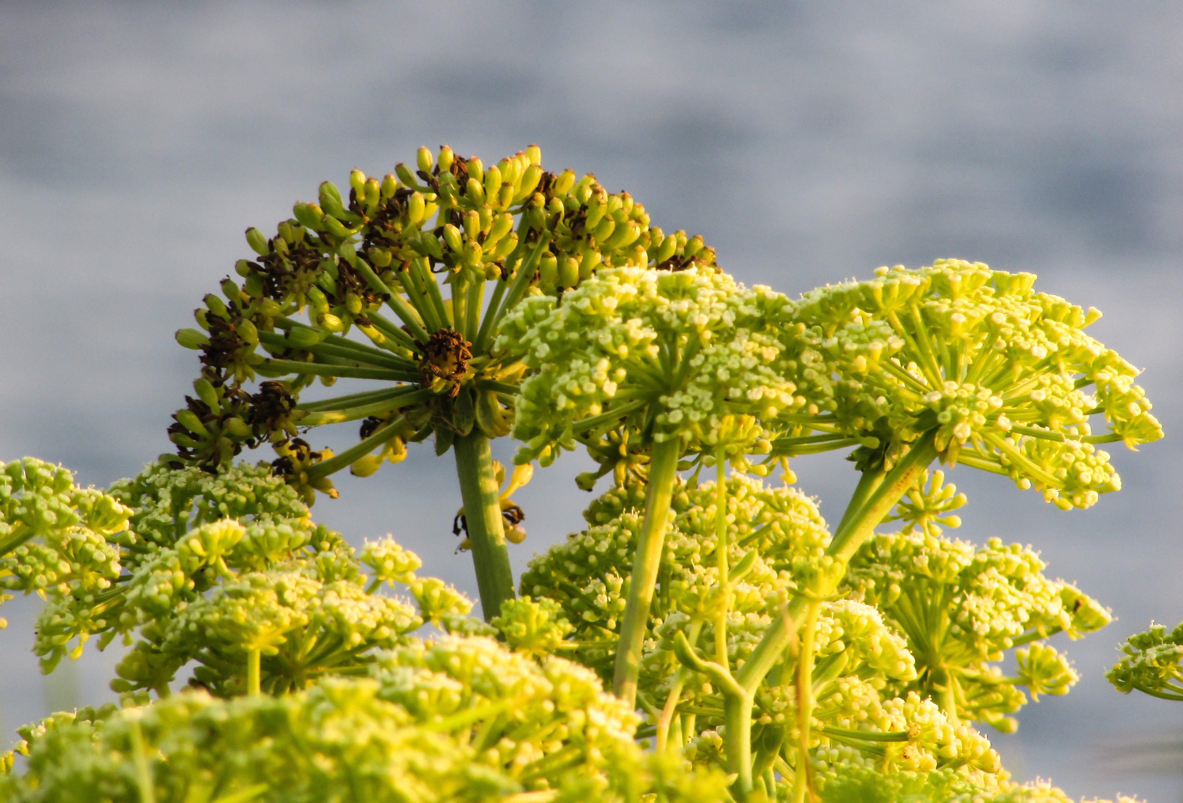 banco de imagens rvore natureza ramo flor plantar haste folha flor comida verde produzir botnica amarelo flora flores silvestres arbusto