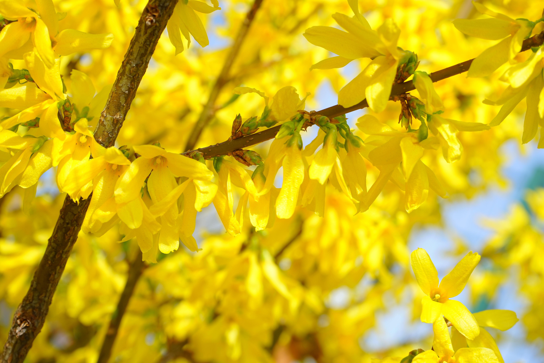 Free Images Nature Branch Blossom Sunlight Leaf Flower