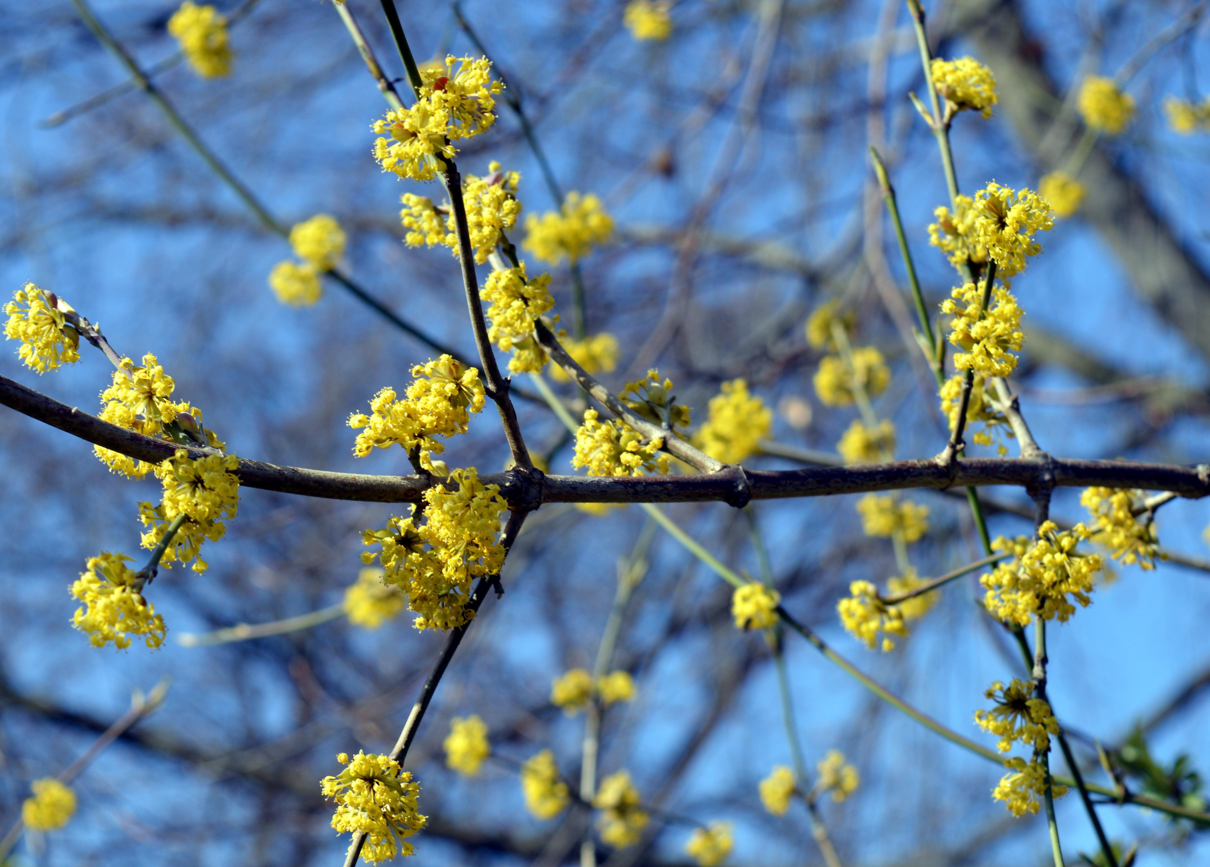 Free Images Nature Branch Blossom Sunlight Leaf Flower Food