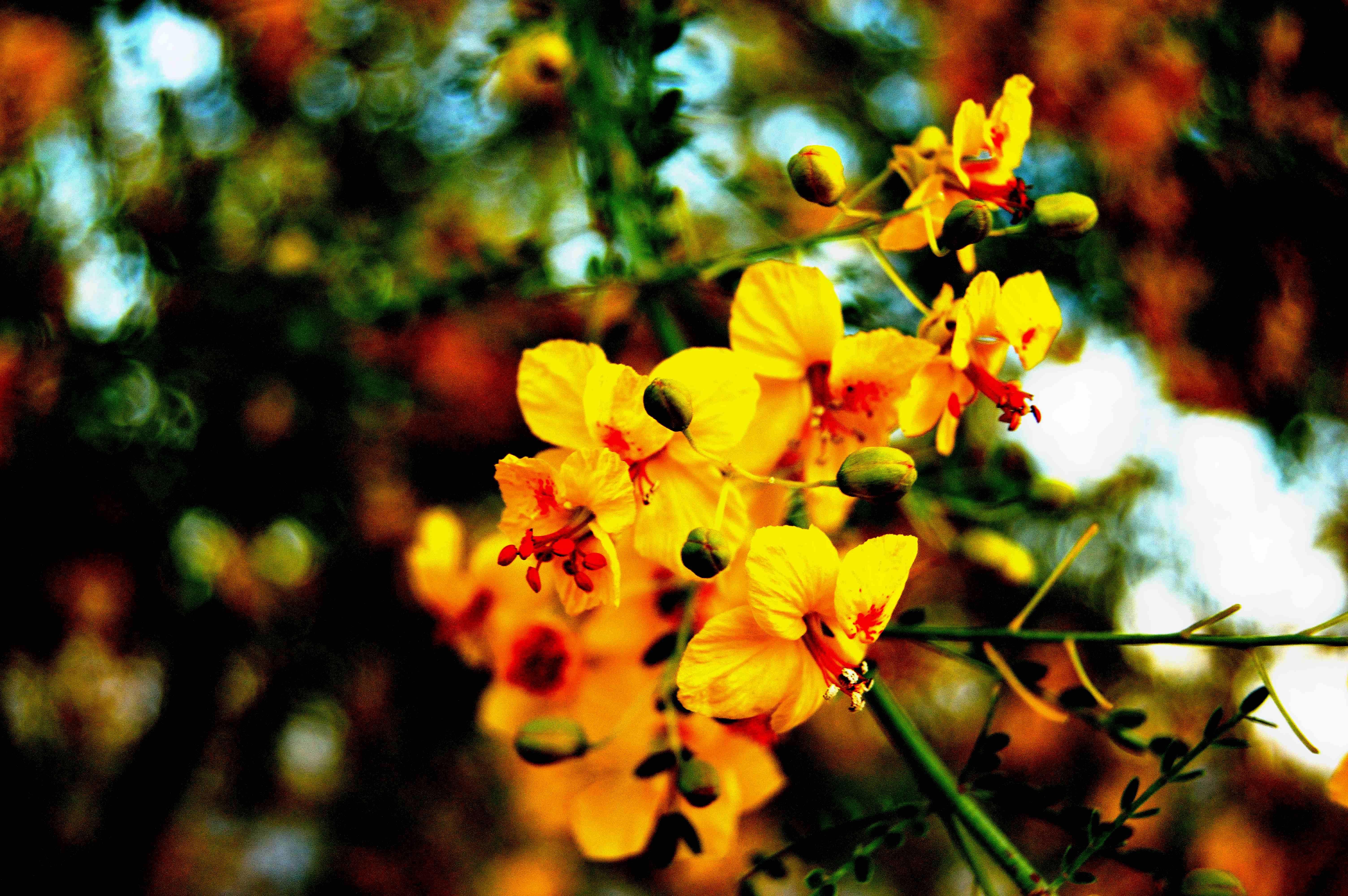 Arbusto Fiori Gialli Primaverili.Immagini Belle Albero Natura Ramo Fiorire Luce Del Sole