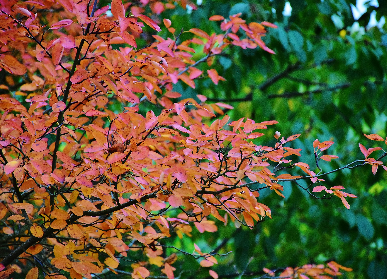 images gratuites : arbre, la nature, branche, fleur, lumière du