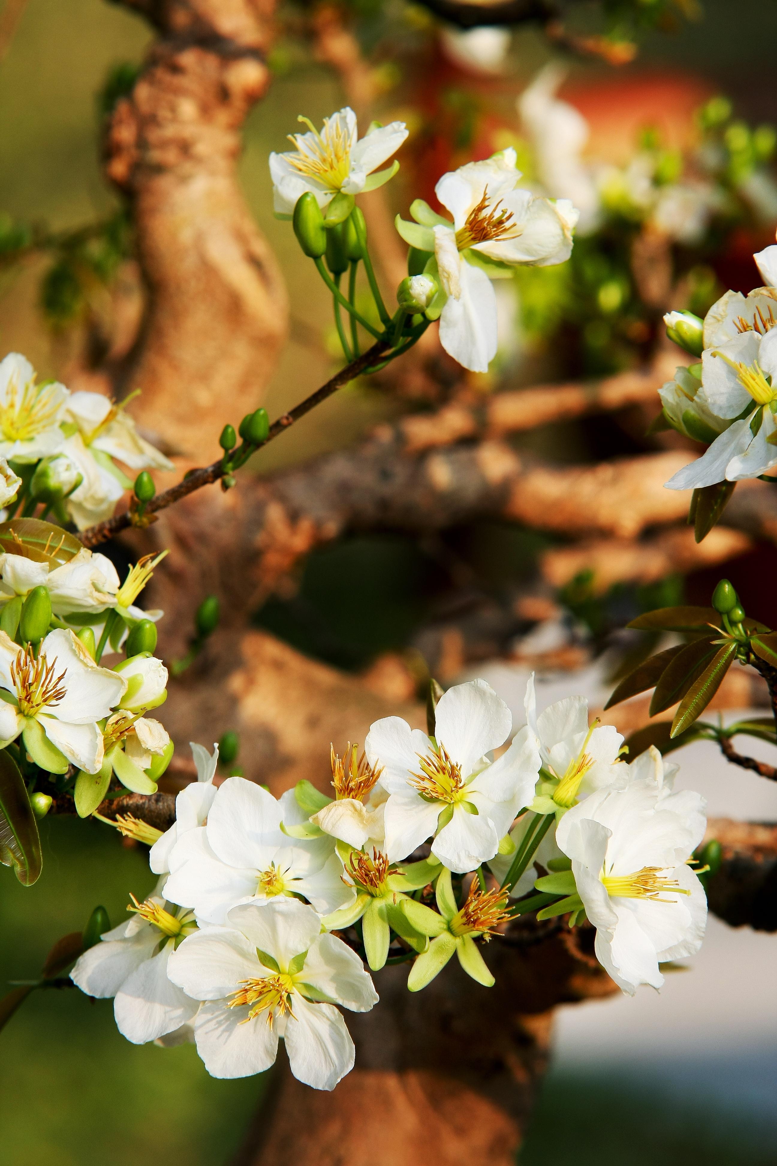 Free Images : tree, nature, branch, blossom, sunlight, leaf, flower ...