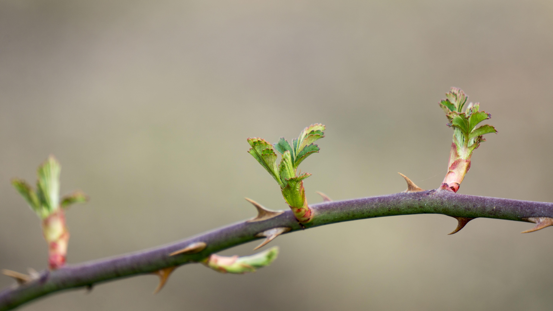 free images tree nature branch blossom vine leaf flower