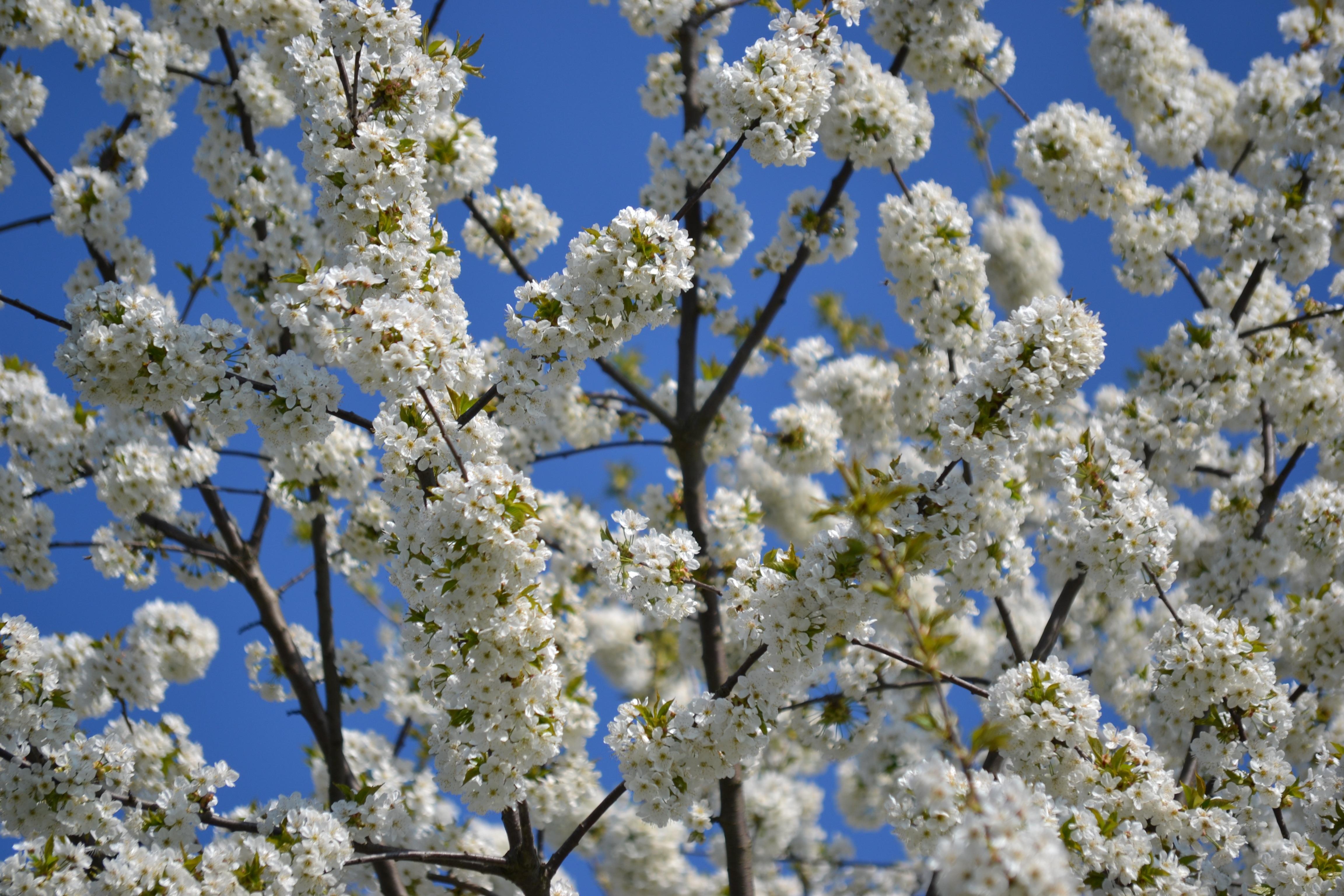меня есть фото весна в апреле когда все цветет многие также