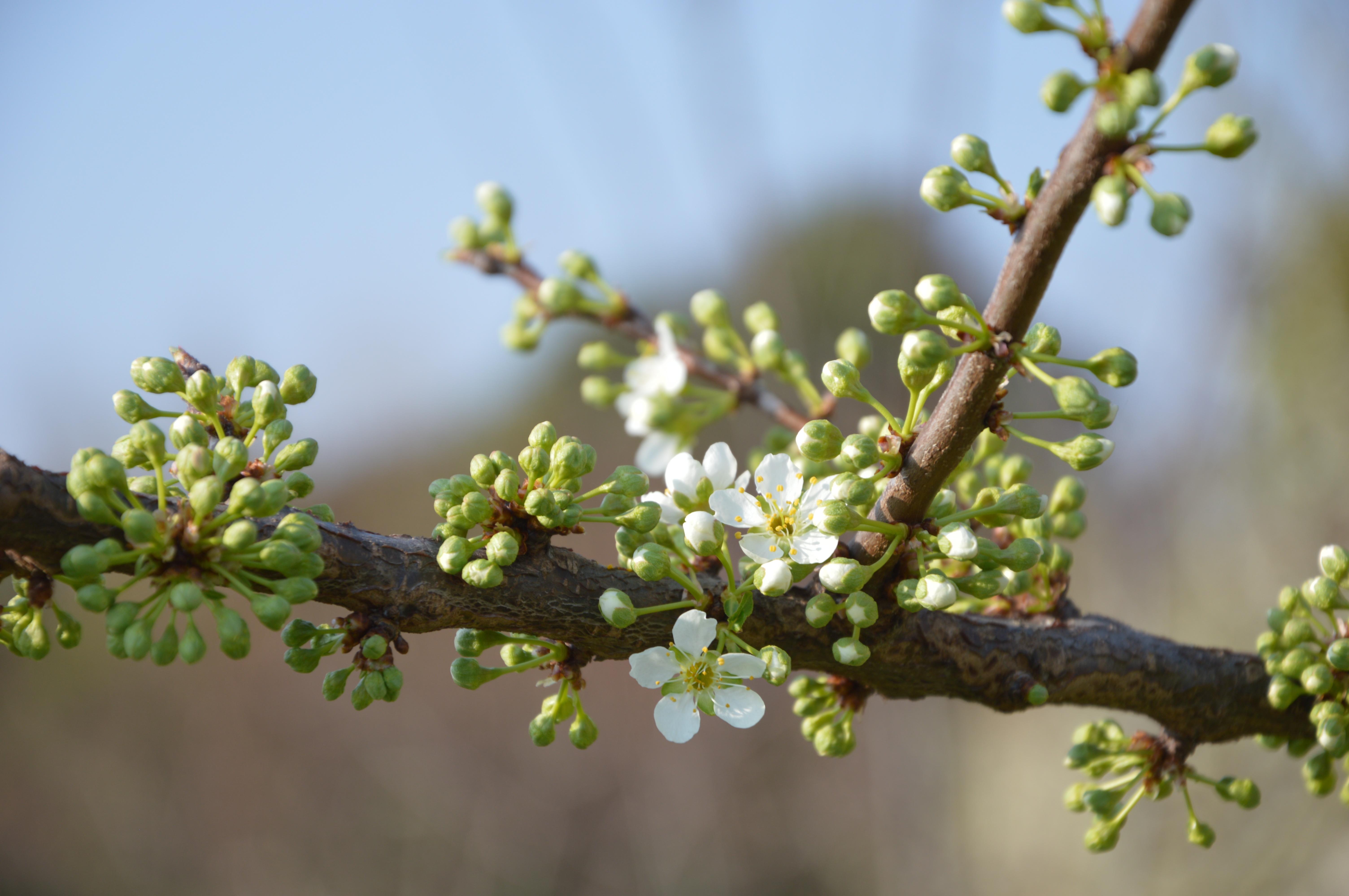 конференций специфическая картинки весна почки на деревьях избавиться излишней