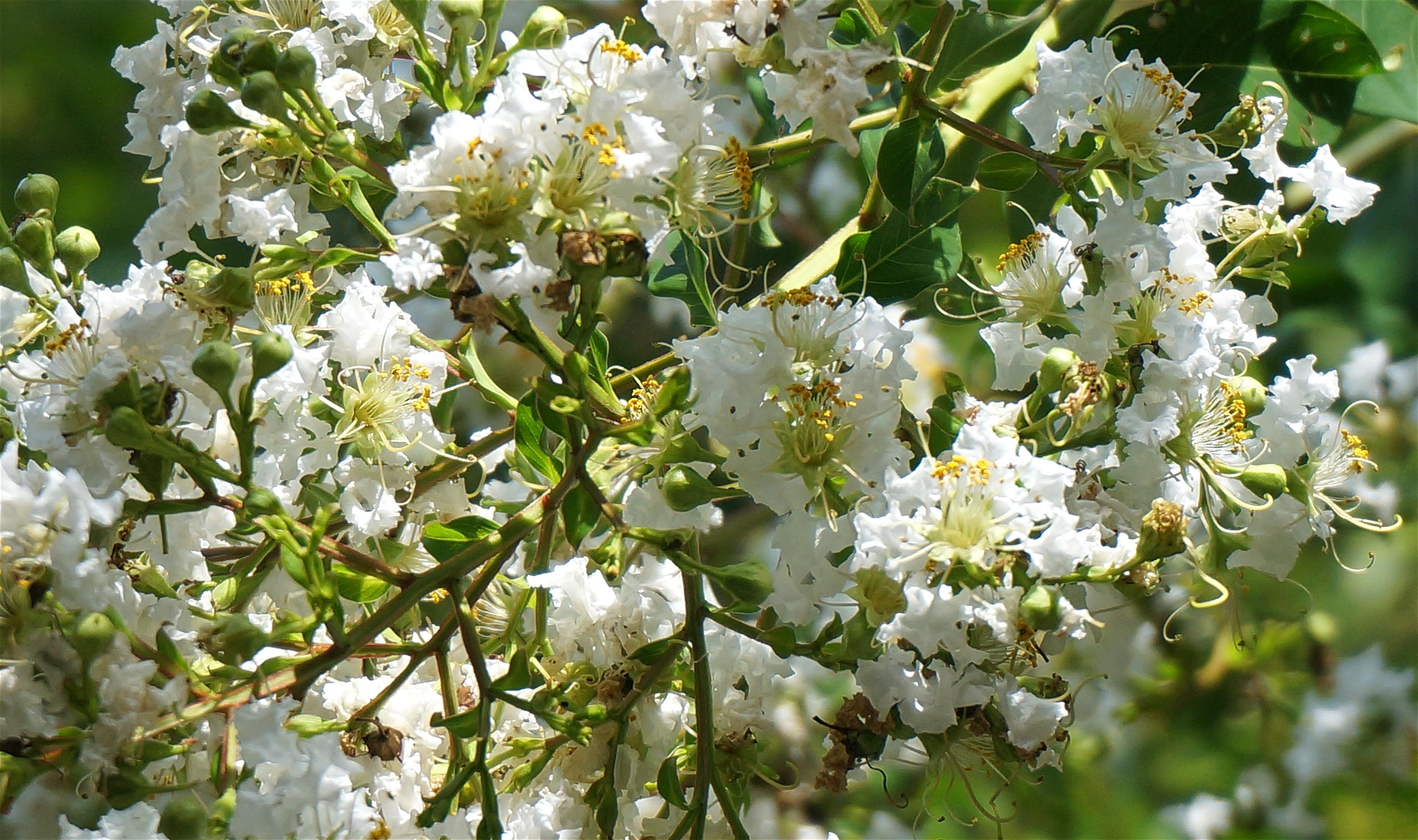 Fotos gratis rbol naturaleza rama flor blanco for Arboles para plantar en verano