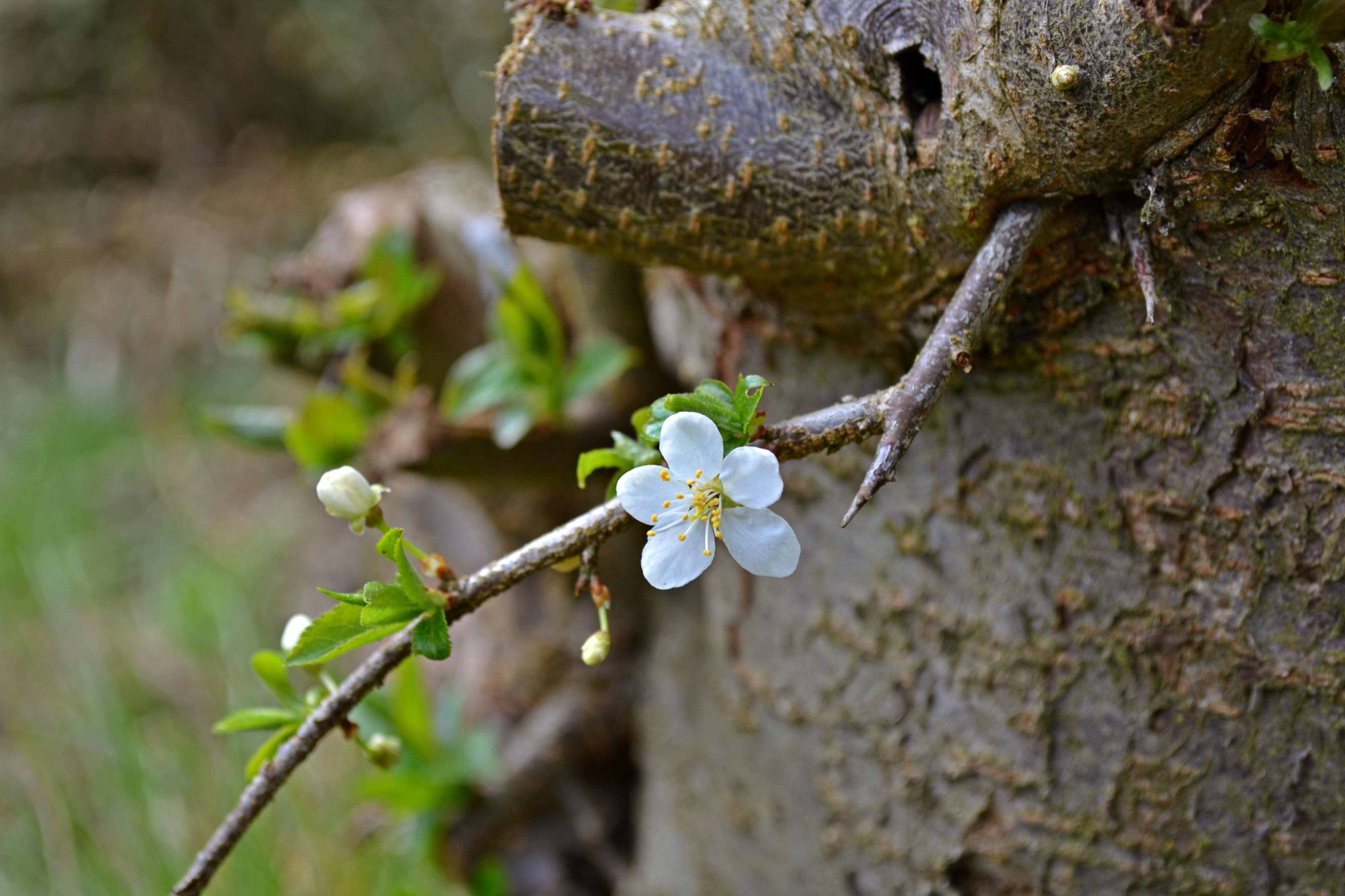 Free Images : nature, branch, blossom, plant, leaf, flower, bloom ...
