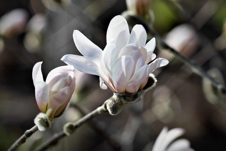 Free Images Nature Branch Blossom White Leaf Flower Petal