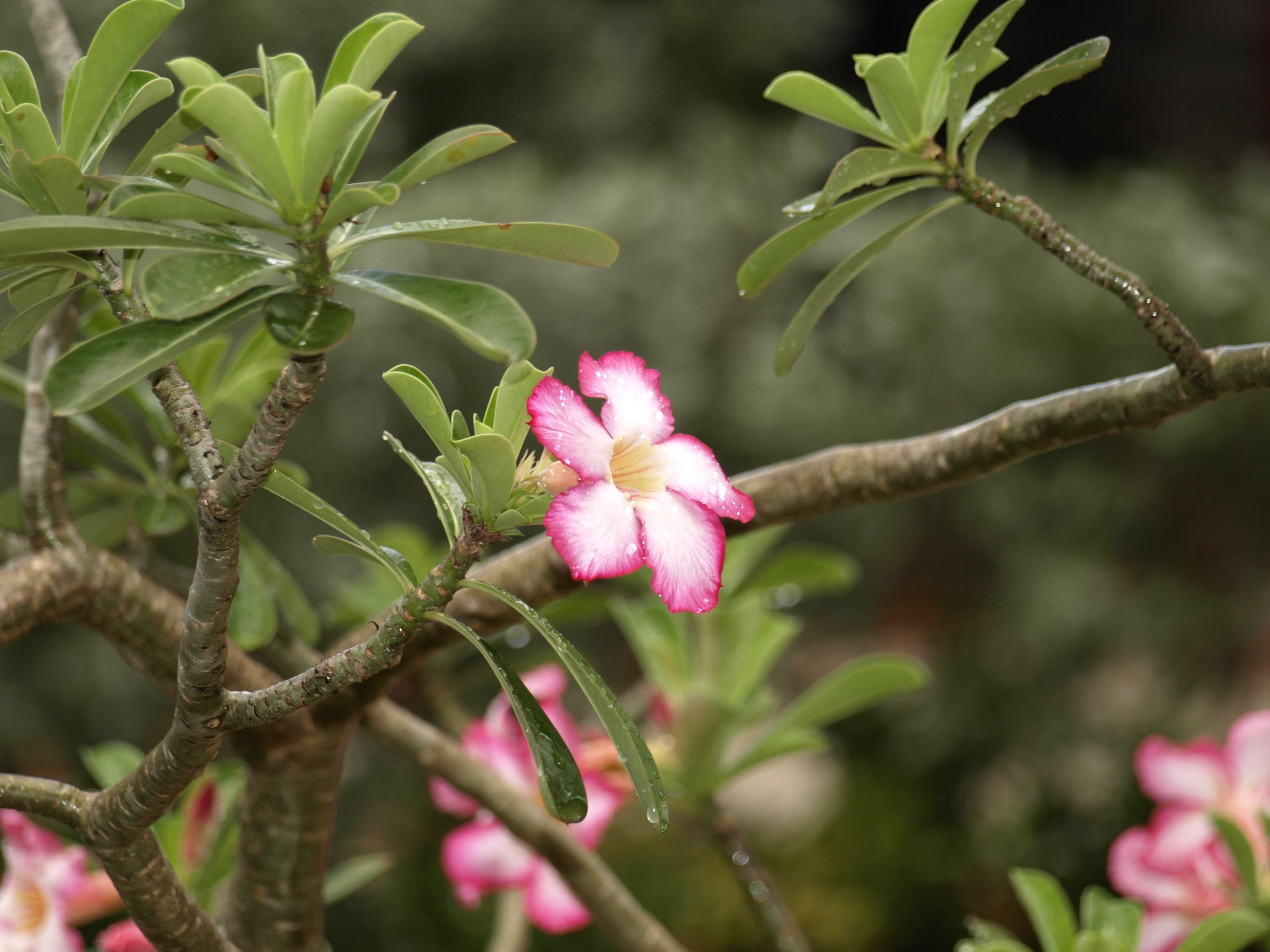 Kostenlose foto Baum Natur Ast blühen Weiß Regen Blume