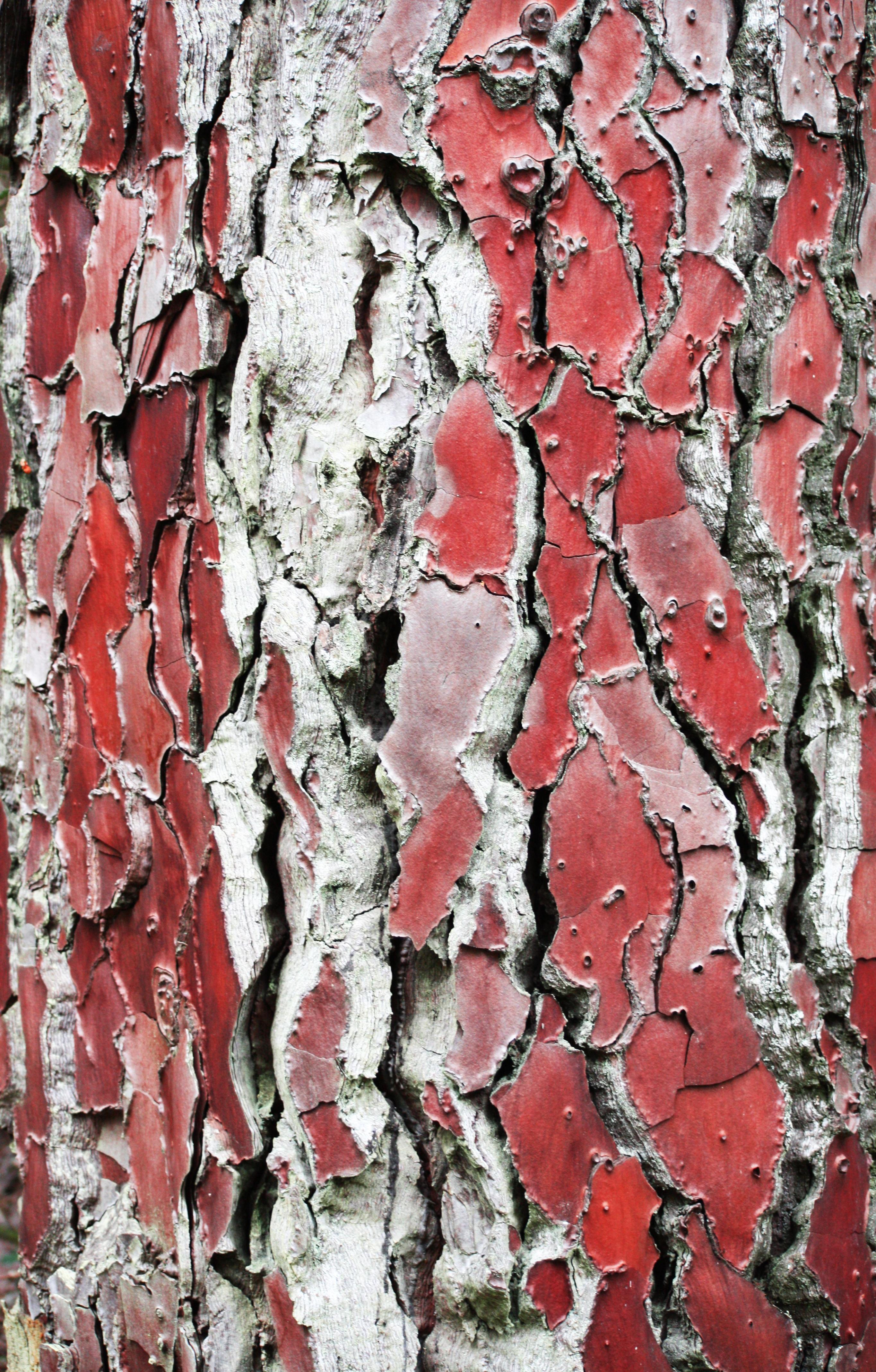 Images gratuites arbre la nature branche fleur bois texture feuille gel tronc mur - Arbre fleurs rouges printemps ...