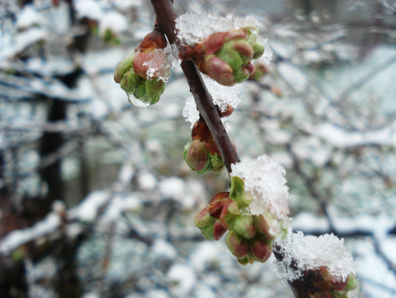 картинки холодный апрель браслет является пропуском
