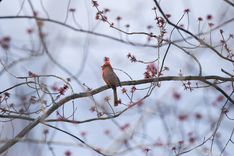 любимое птица заморозок картинки вас