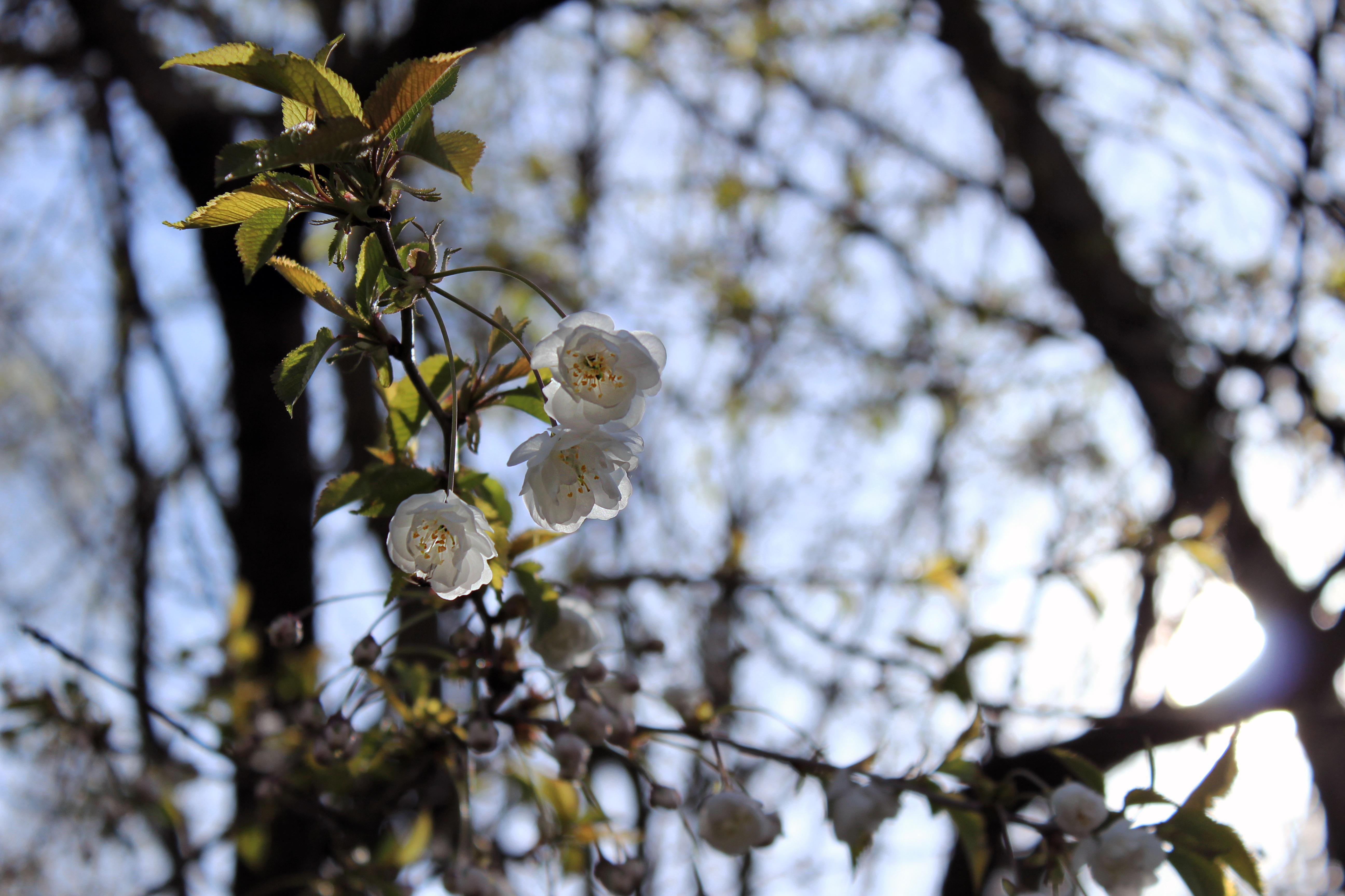 Images Gratuites Arbre La Nature Branche Neige Hiver Blanc