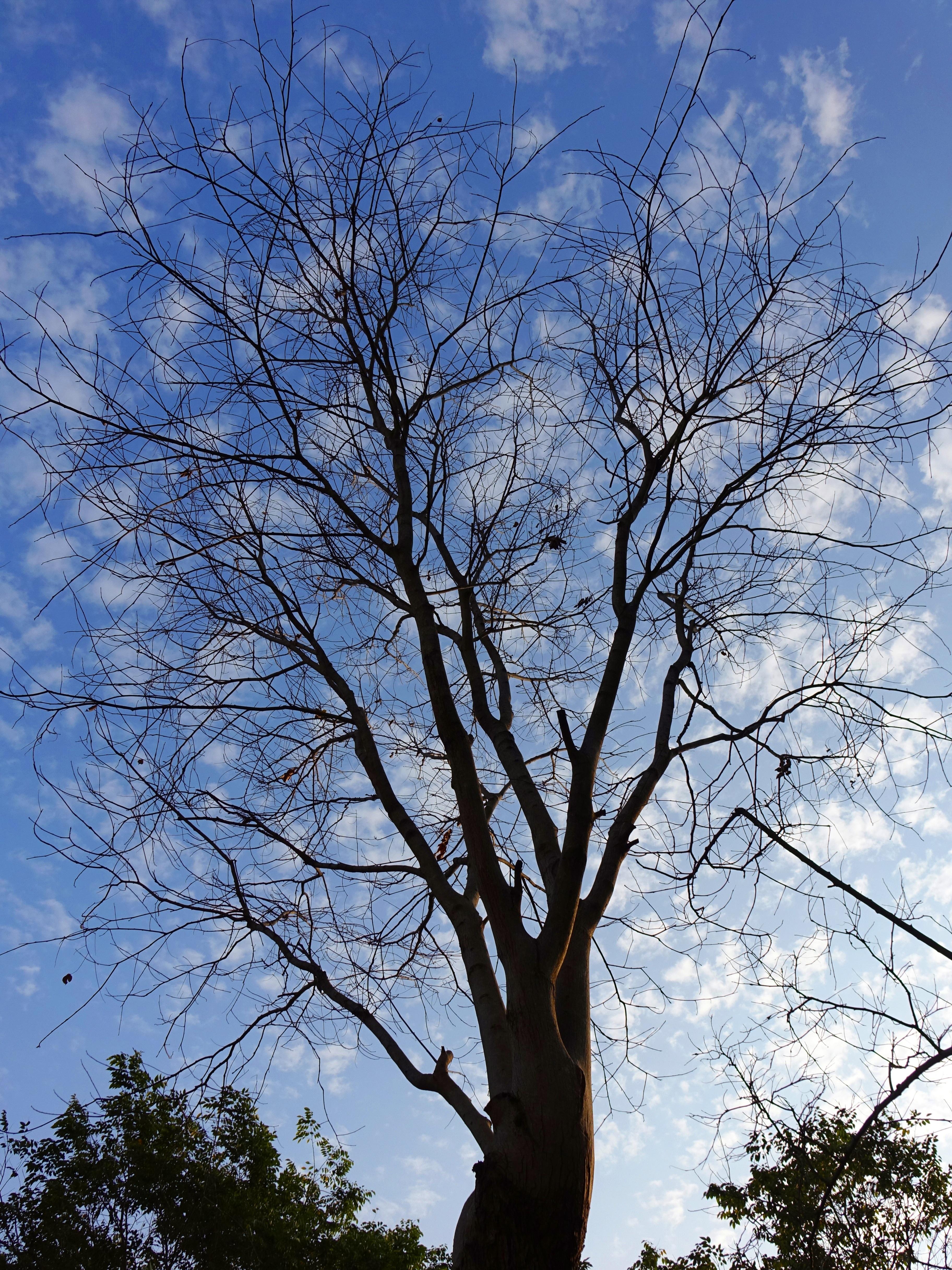 Free Images Nature Branch Blossom Winter Sky Leaf Flower