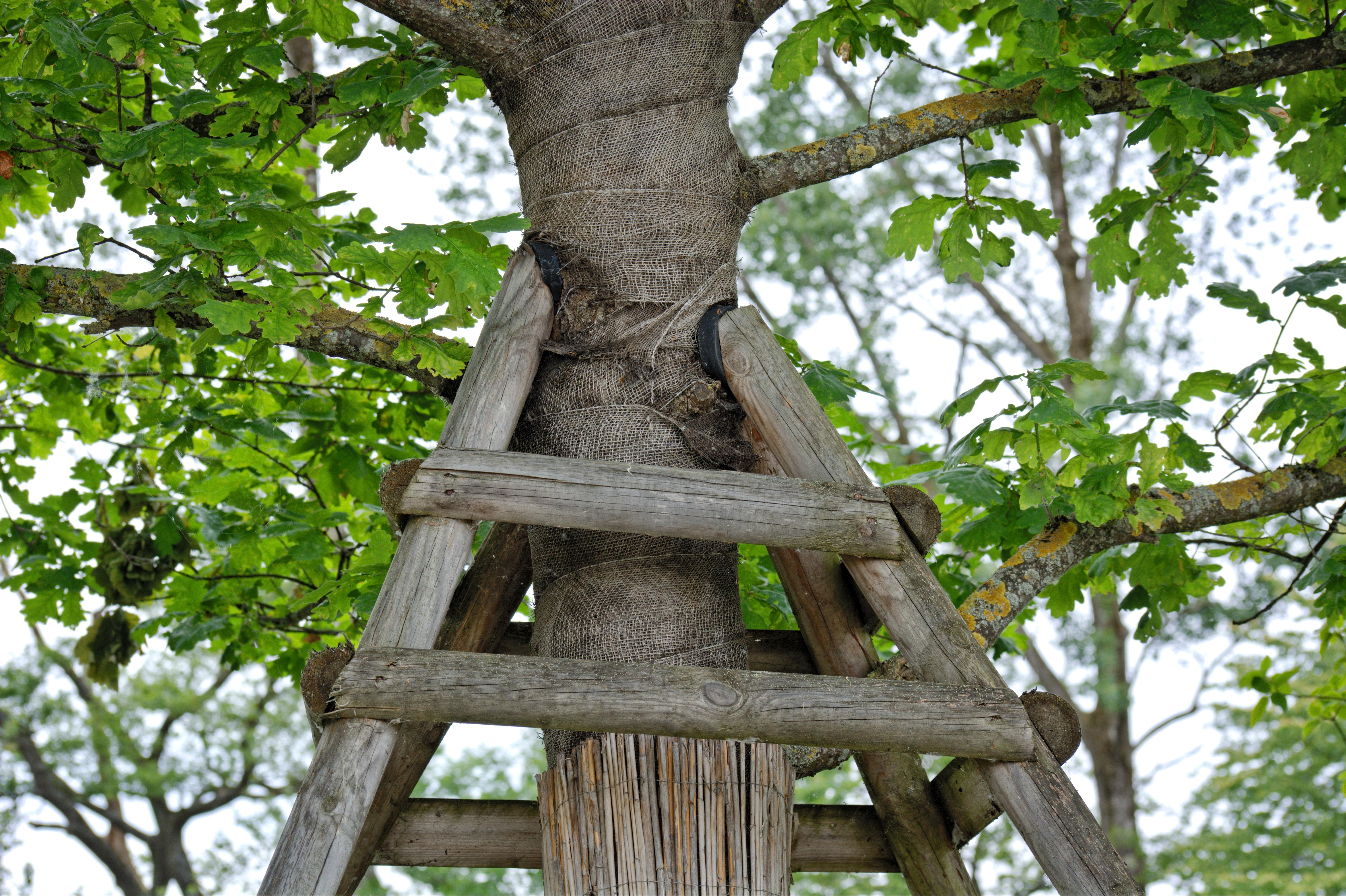 images gratuites arbre la nature branche croissance plante feuille fleur tronc jungle. Black Bedroom Furniture Sets. Home Design Ideas