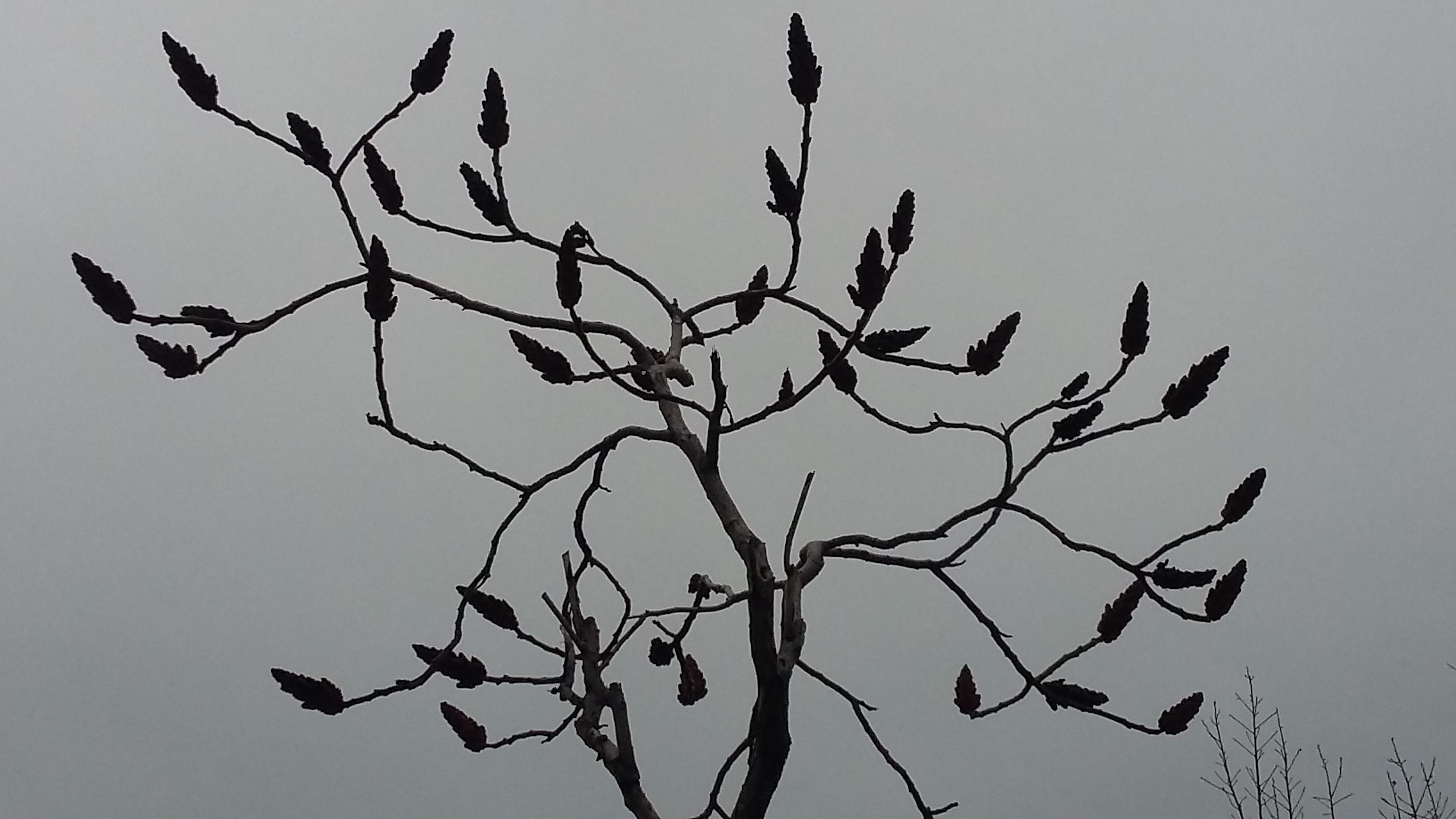 Gambar Pohon Alam Cabang Daun Bunga Garis Ranting Seni