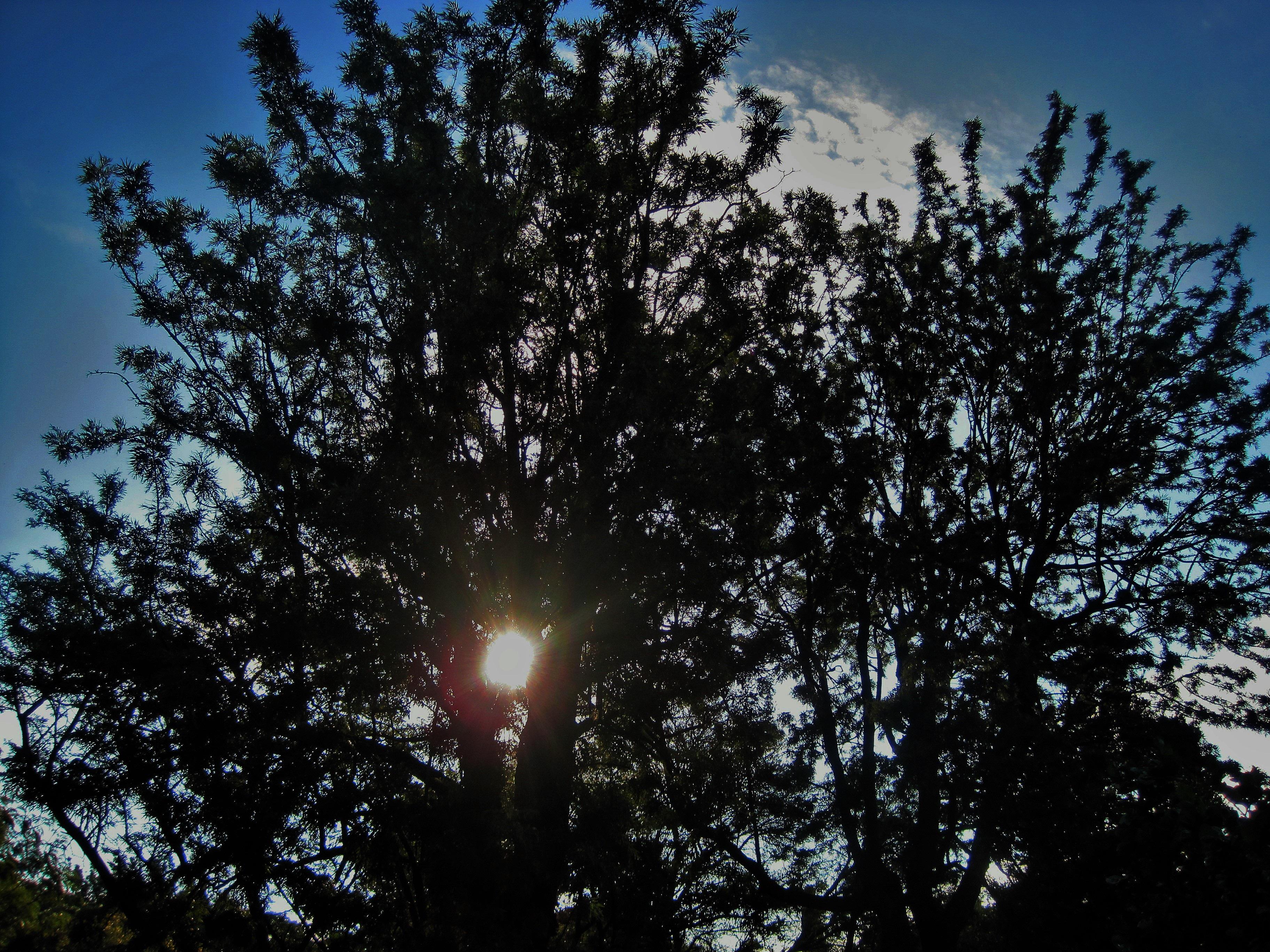 Gambar Pohon Alam Cahaya Awan Menanam Langit Sinar