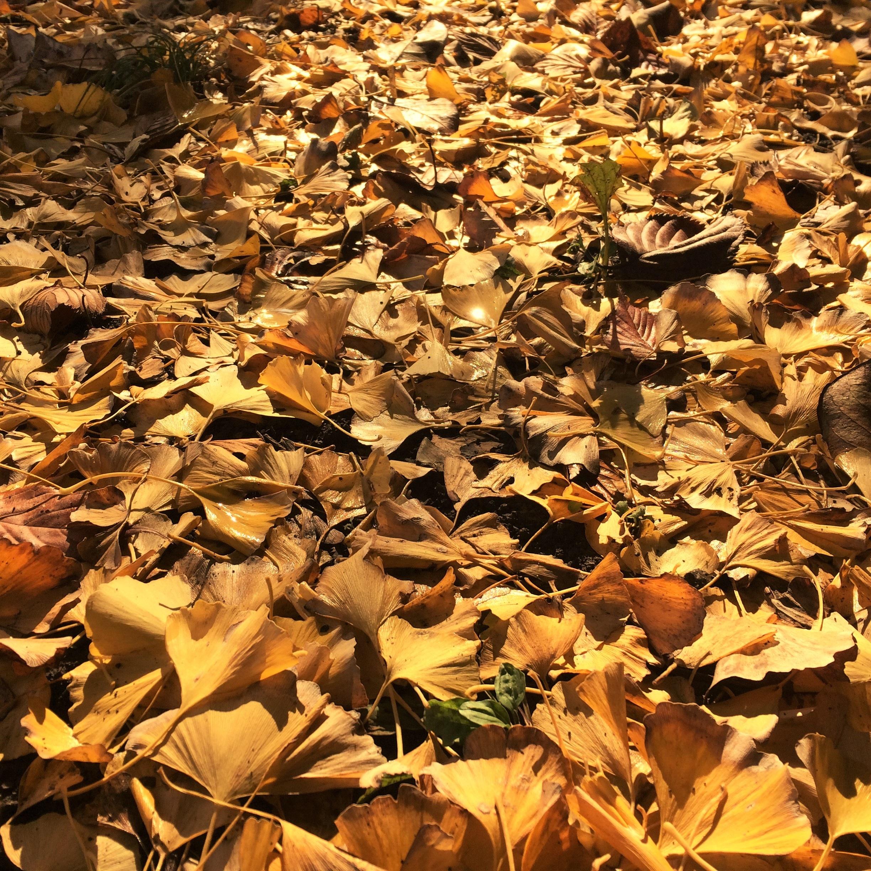 поддержка, мое деревья с опавшей листвой картинки словам