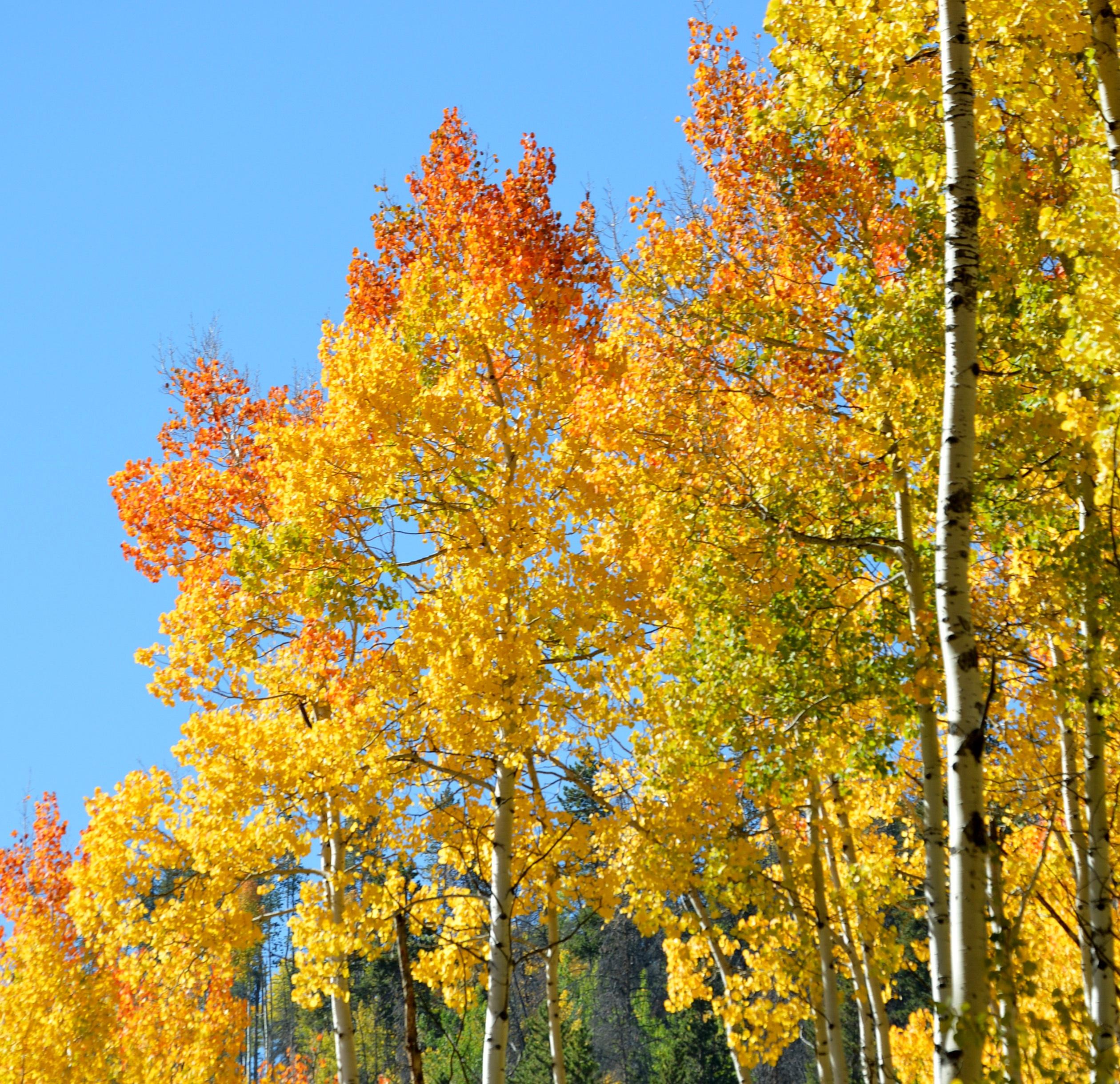 Images gratuites arbre la nature branche montagne - Arbres a feuilles caduques ...