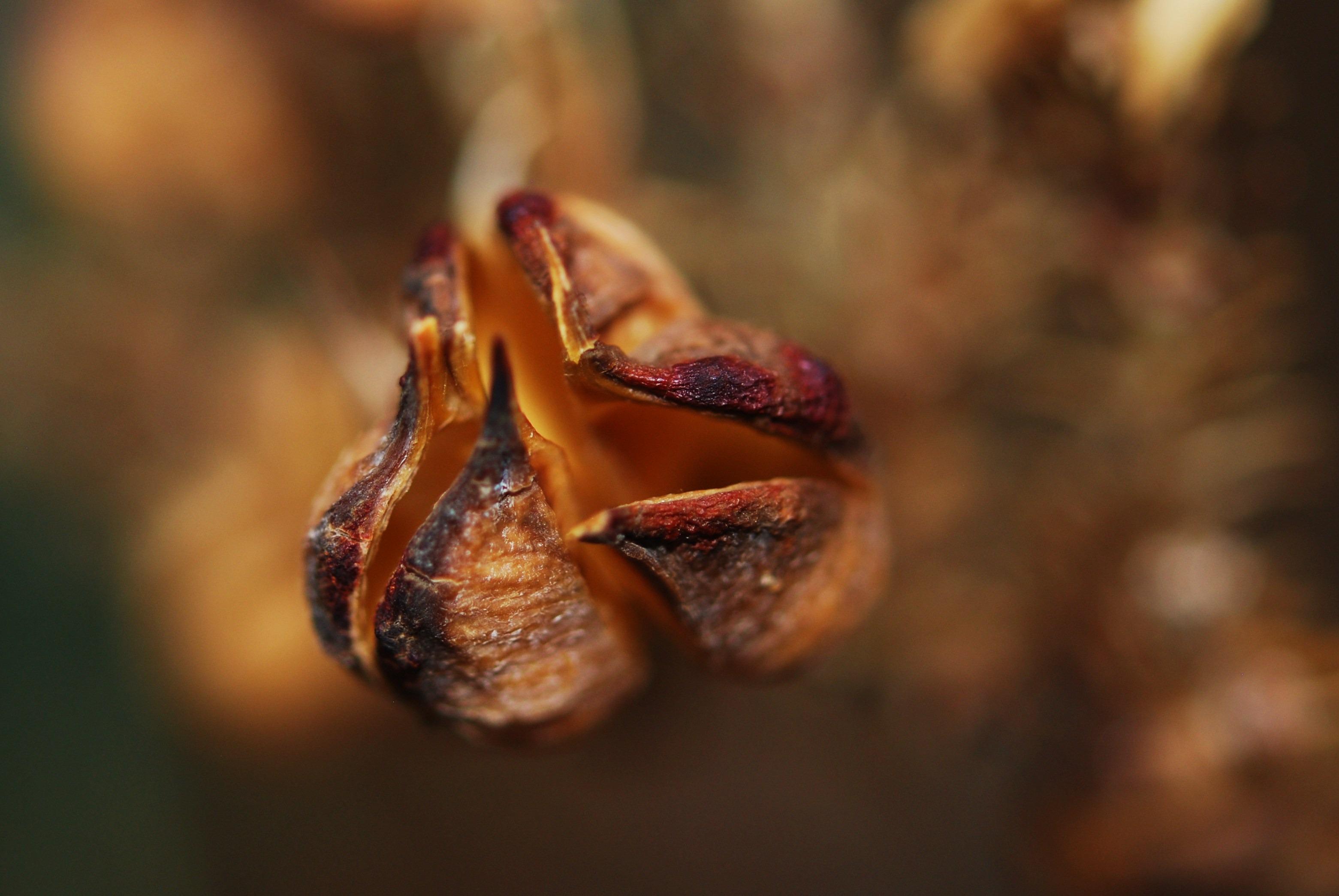 Free Images : tree, nature, branch, open, leaf, flower, petal ...