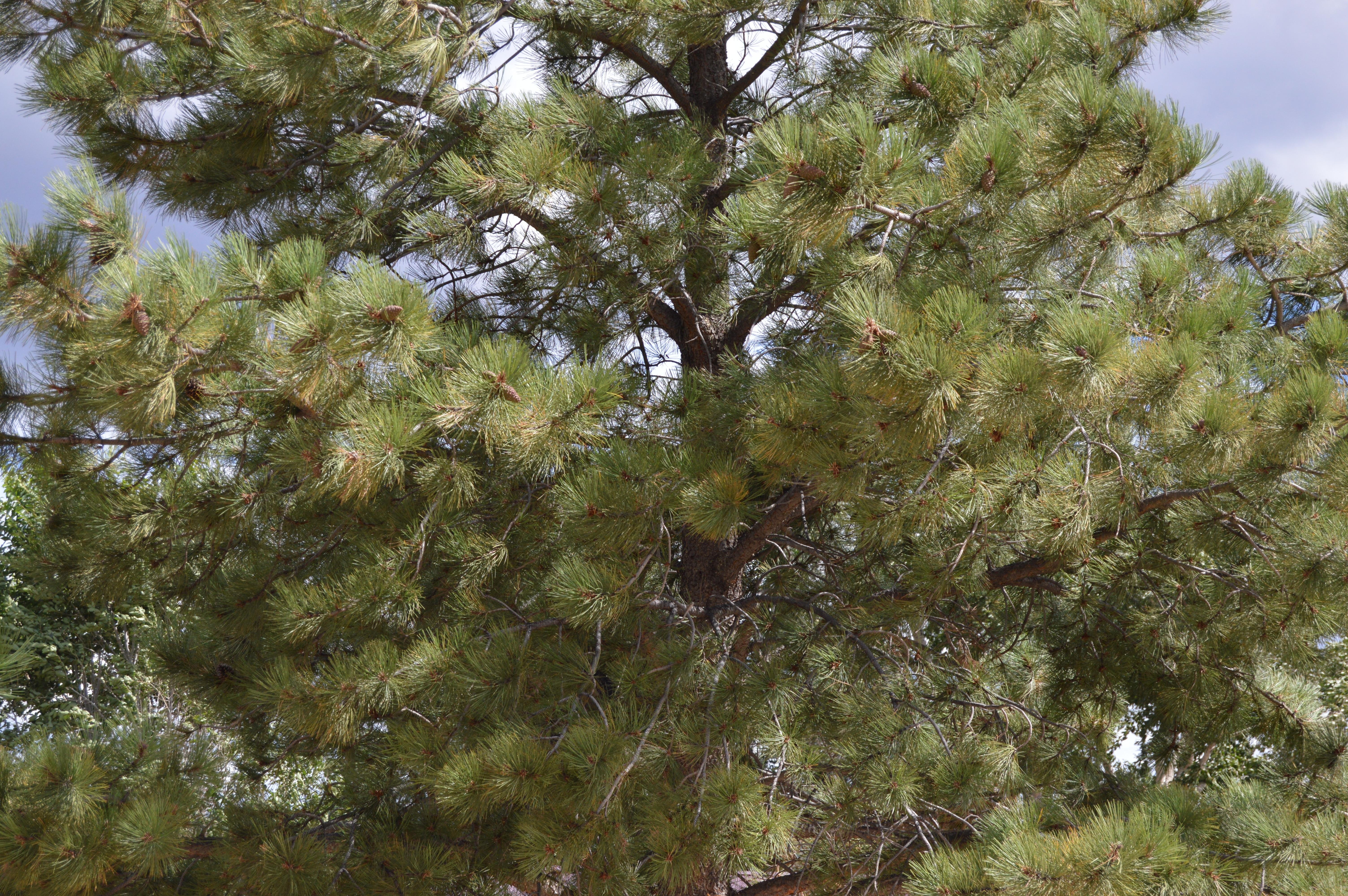 Fotos gratis naturaleza rama flor ambiente hojas for Arboles de jardin de hoja perenne