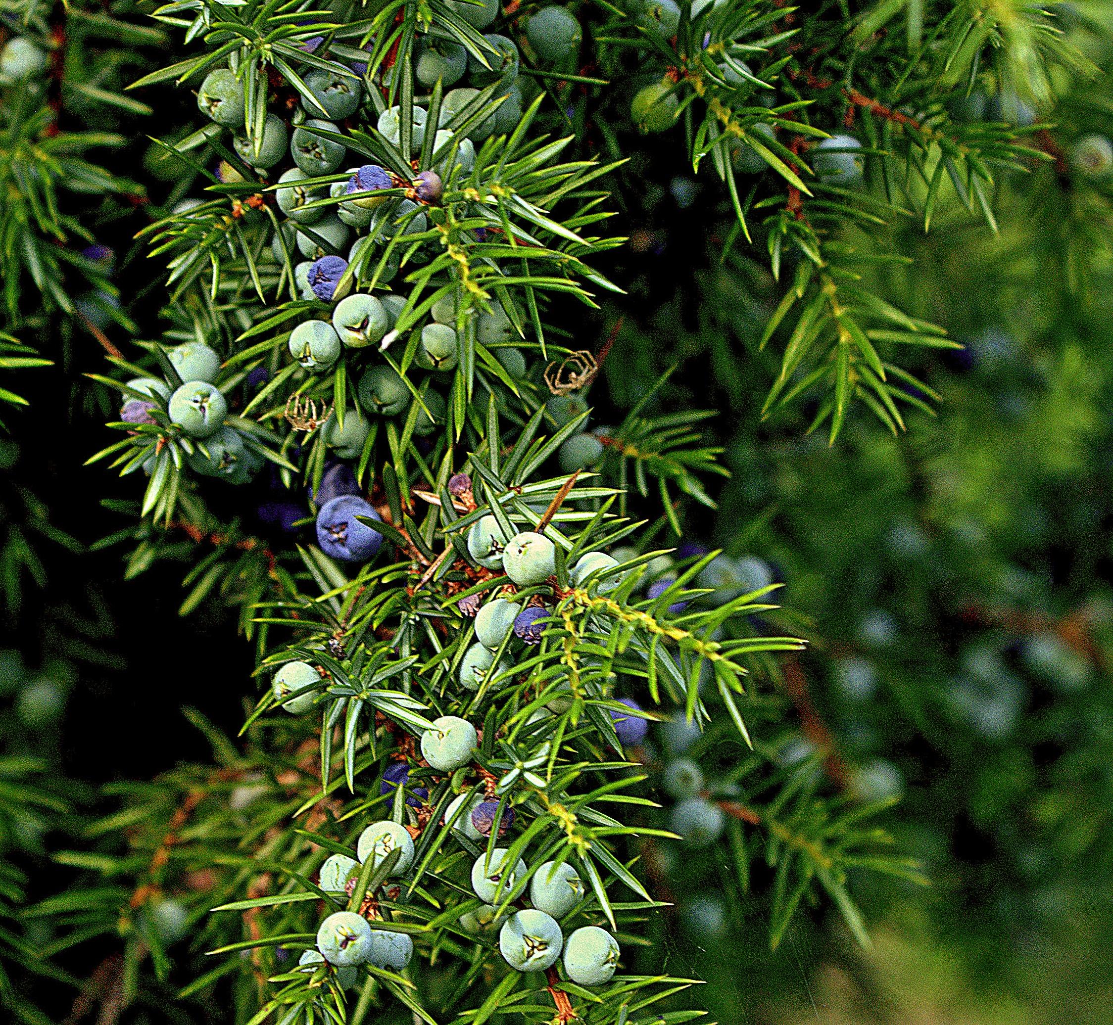 Free Images : tree, nature, branch, fruit, flower, bush