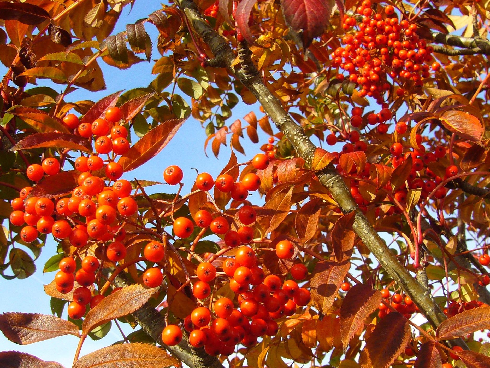 Free Images Nature Branch Fruit Leaf Flower Food Produce