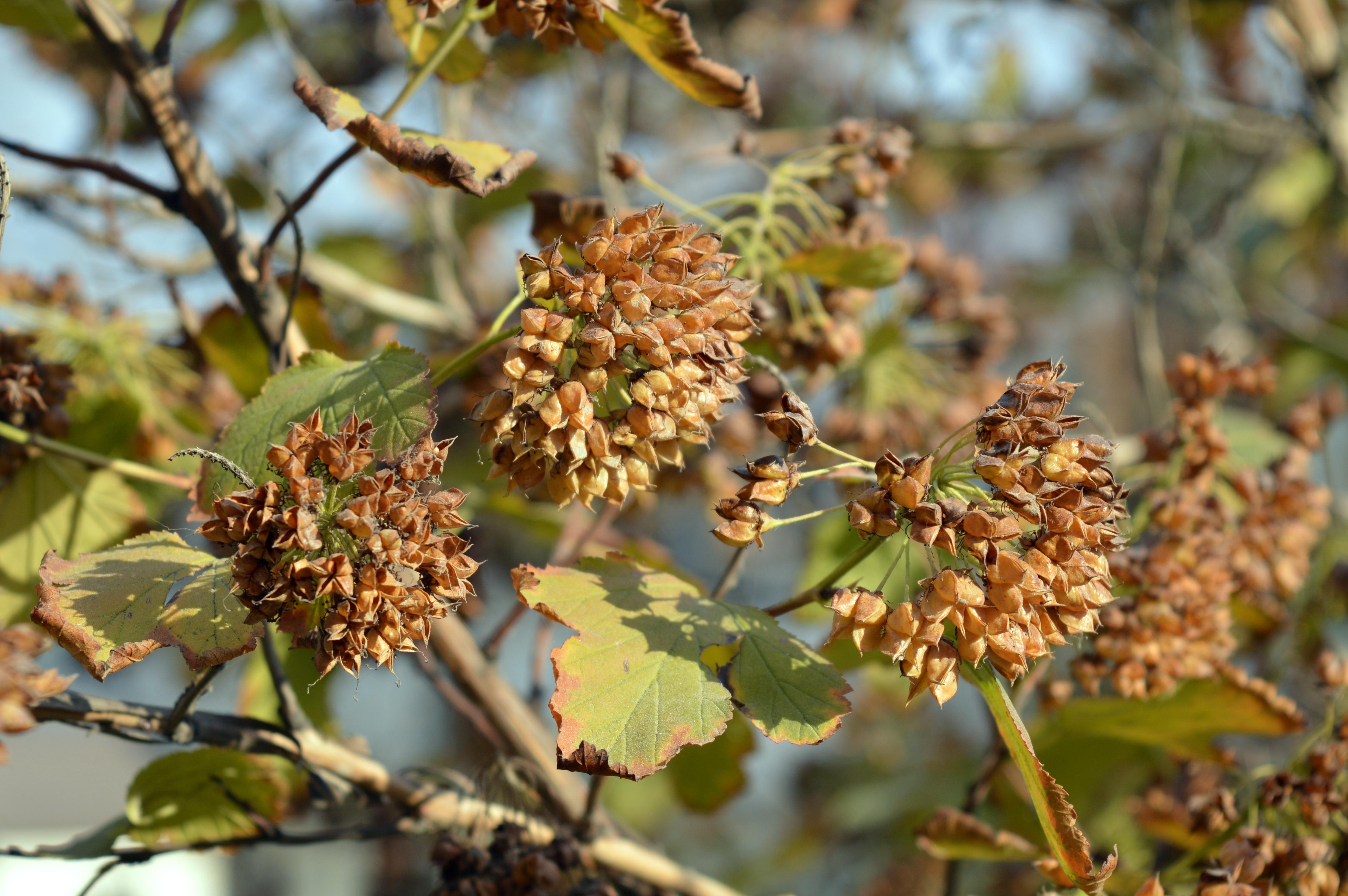 Gambar Pohon Alam Cabang Menanam Buah Daun Bunga Semak Kotak Makan Duo Sunday Green Makanan Hijau Menghasilkan Musim Gugur Botani Taman Flora Fauna Lembar