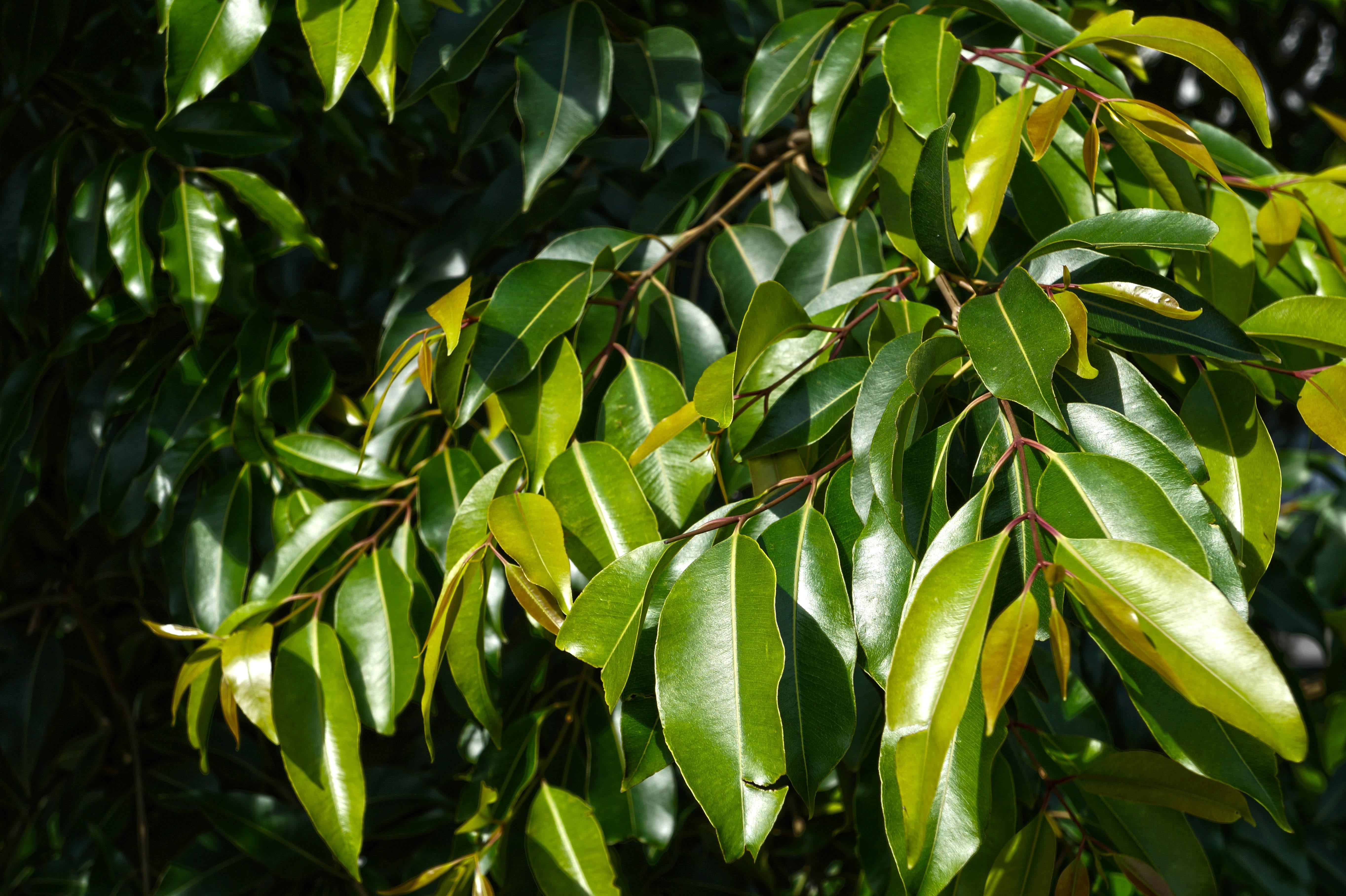 Fotos Gratis : árbol, Naturaleza, Rama, Fruta, Hoja, Flor