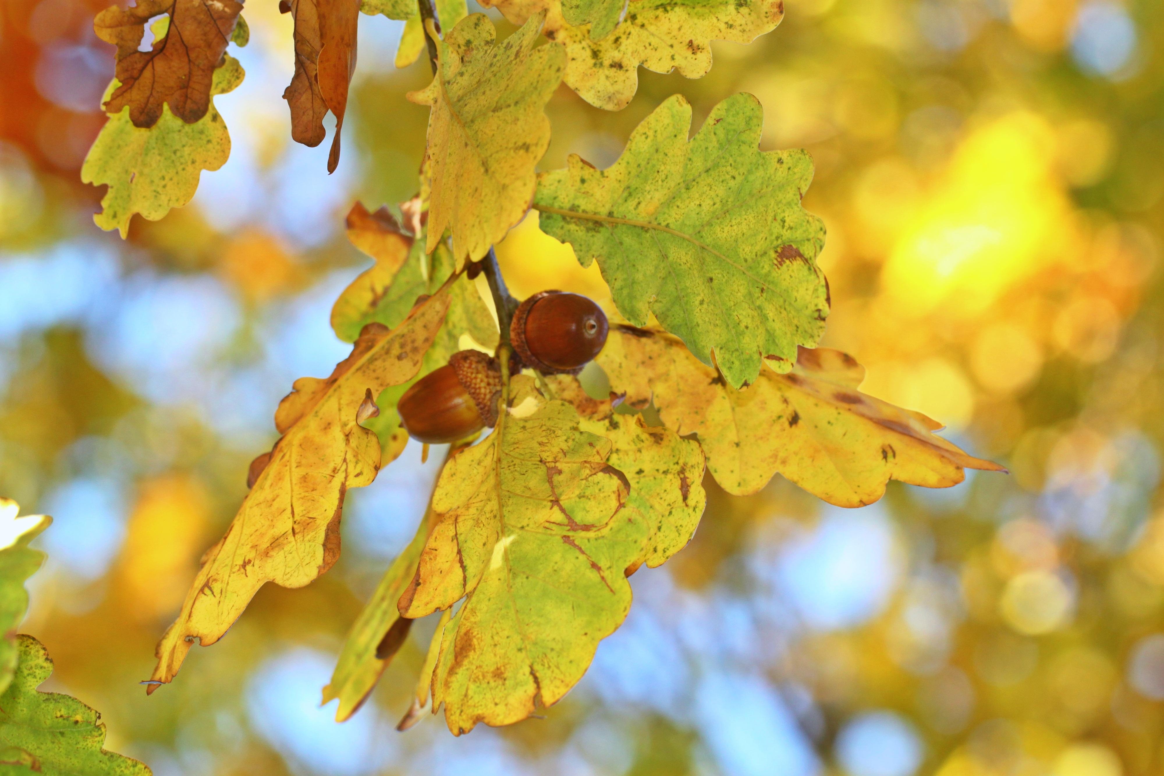 Kostenlose foto : Baum, Natur, Ast, Frucht, Sonnenlicht, Blatt ...