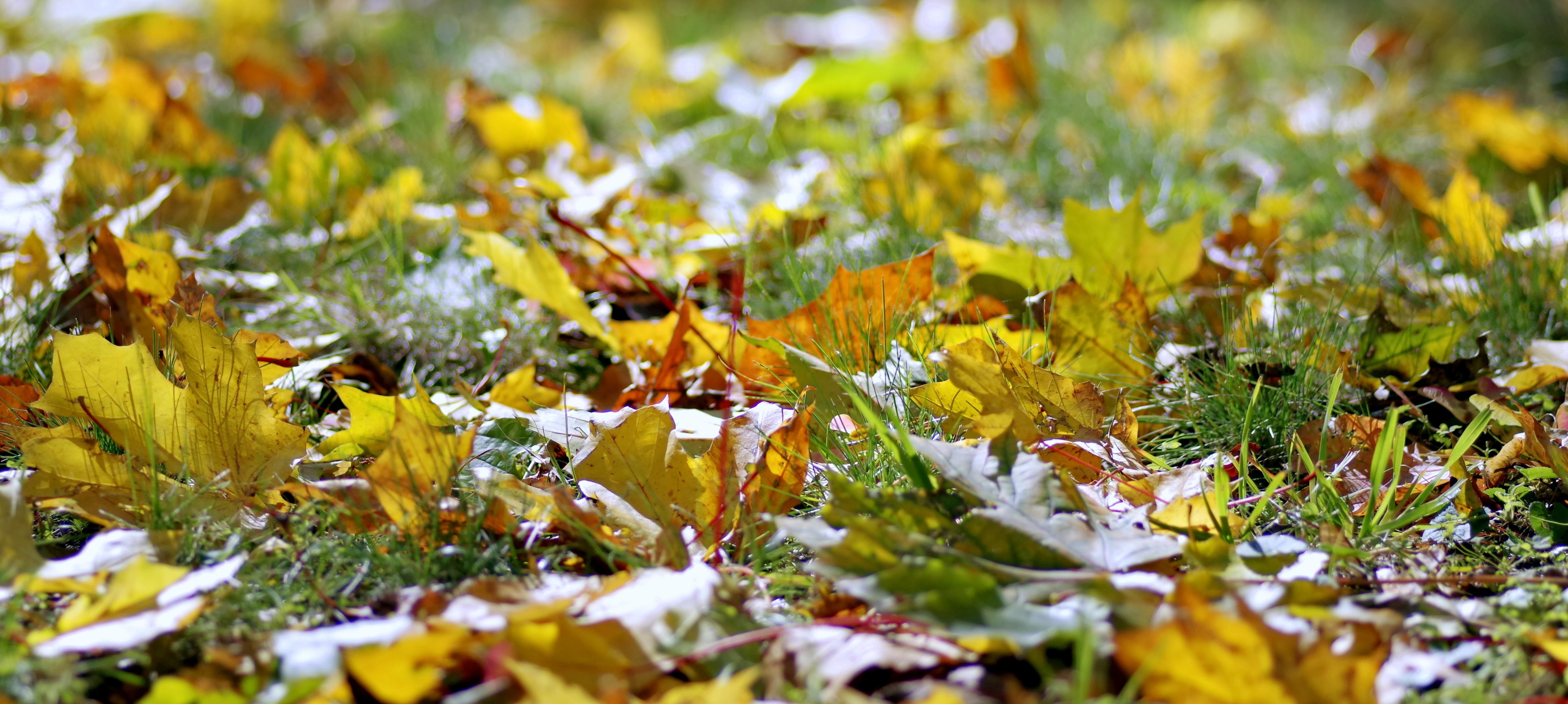 Images Gratuites Arbre La Nature Branche Plante Pelouse