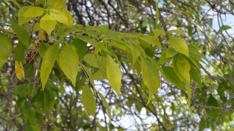Плодовые деревья по листу фото