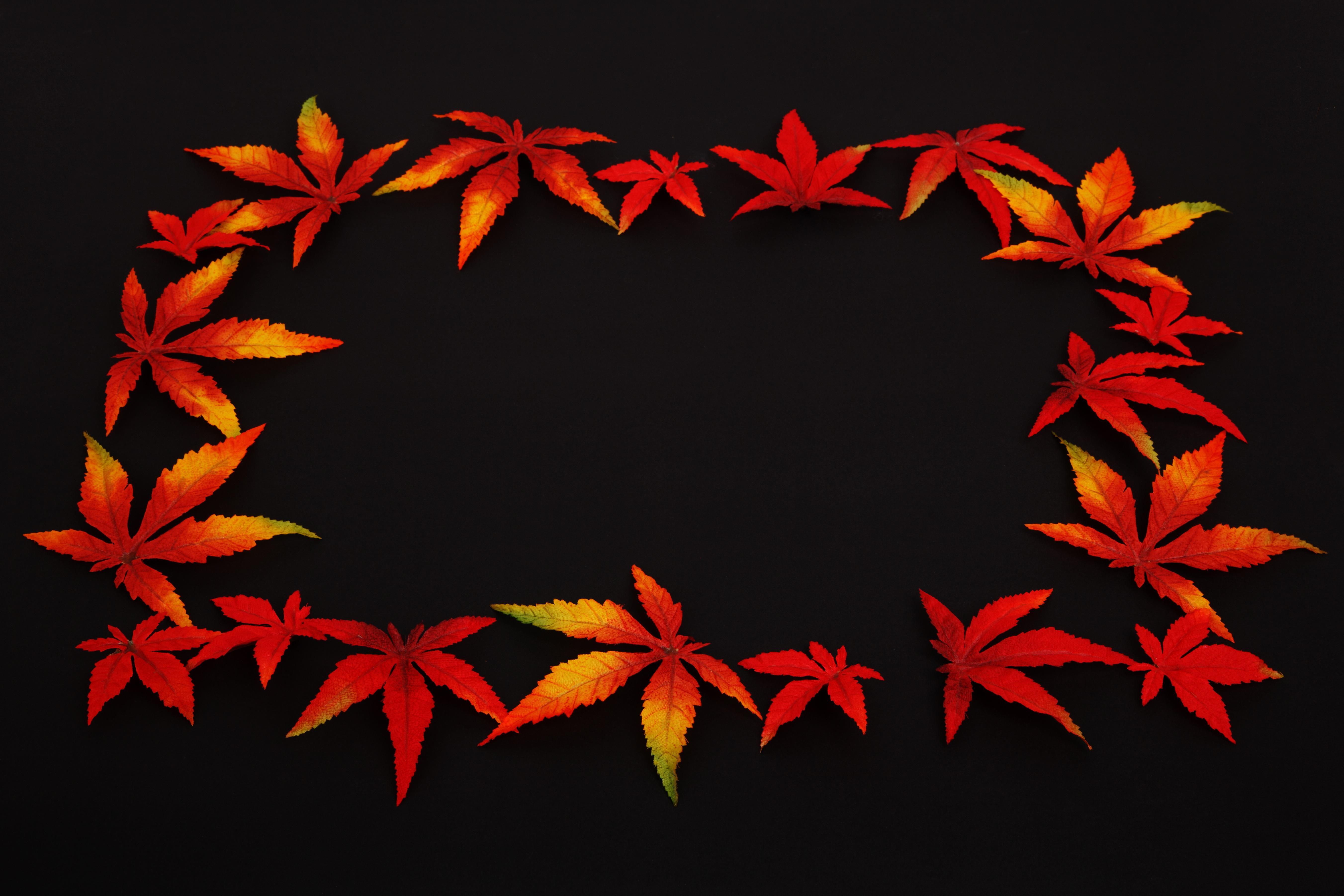 Fotos gratis : naturaleza, rama, planta, otoño, flor, pétalo, oscuro ...