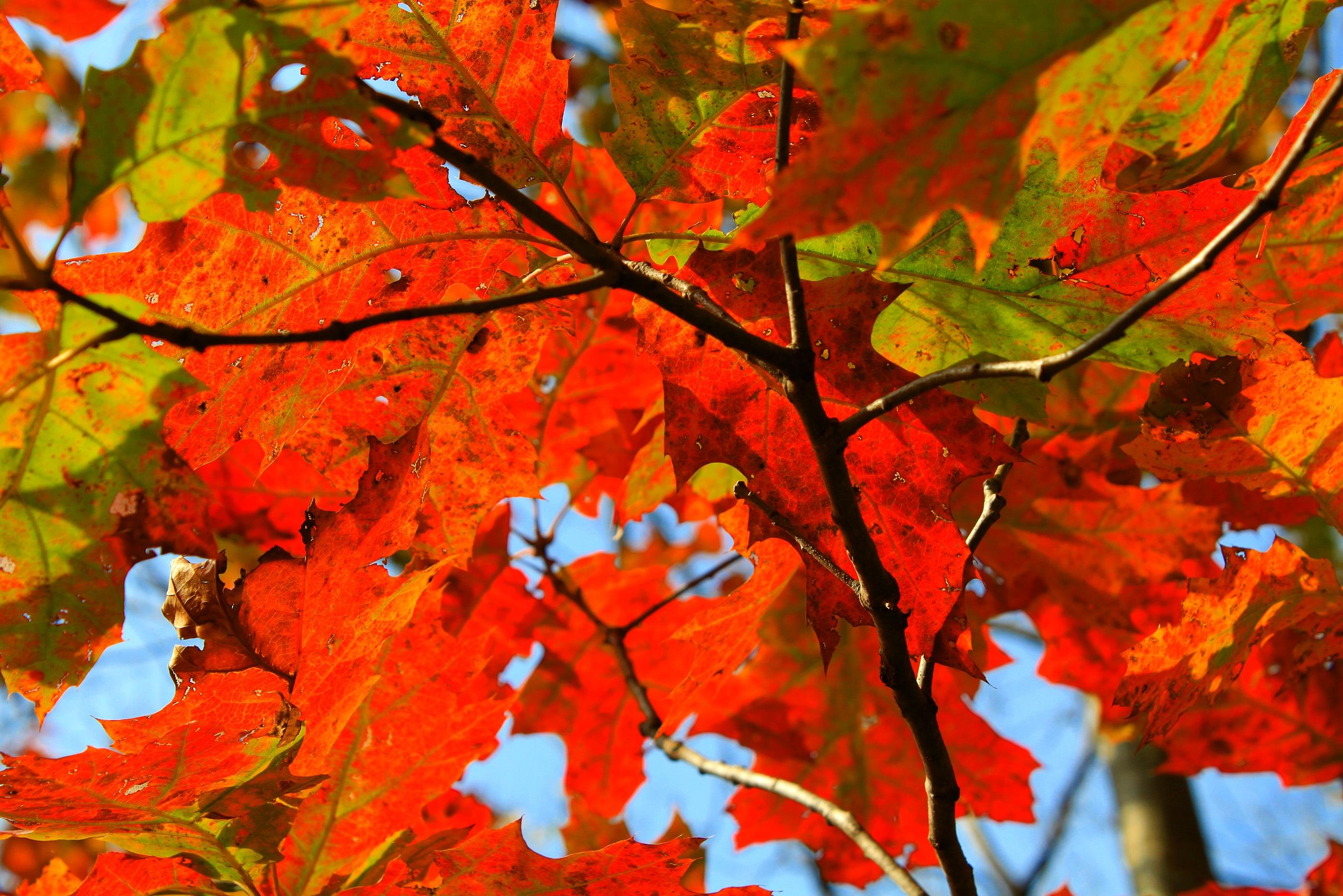 gratis billeder tr230 natur afdeling efter229r orange
