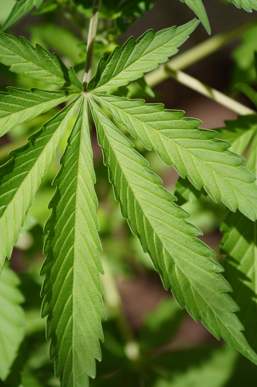 Images gratuites arbre la nature branche feuille for Plante arbuste